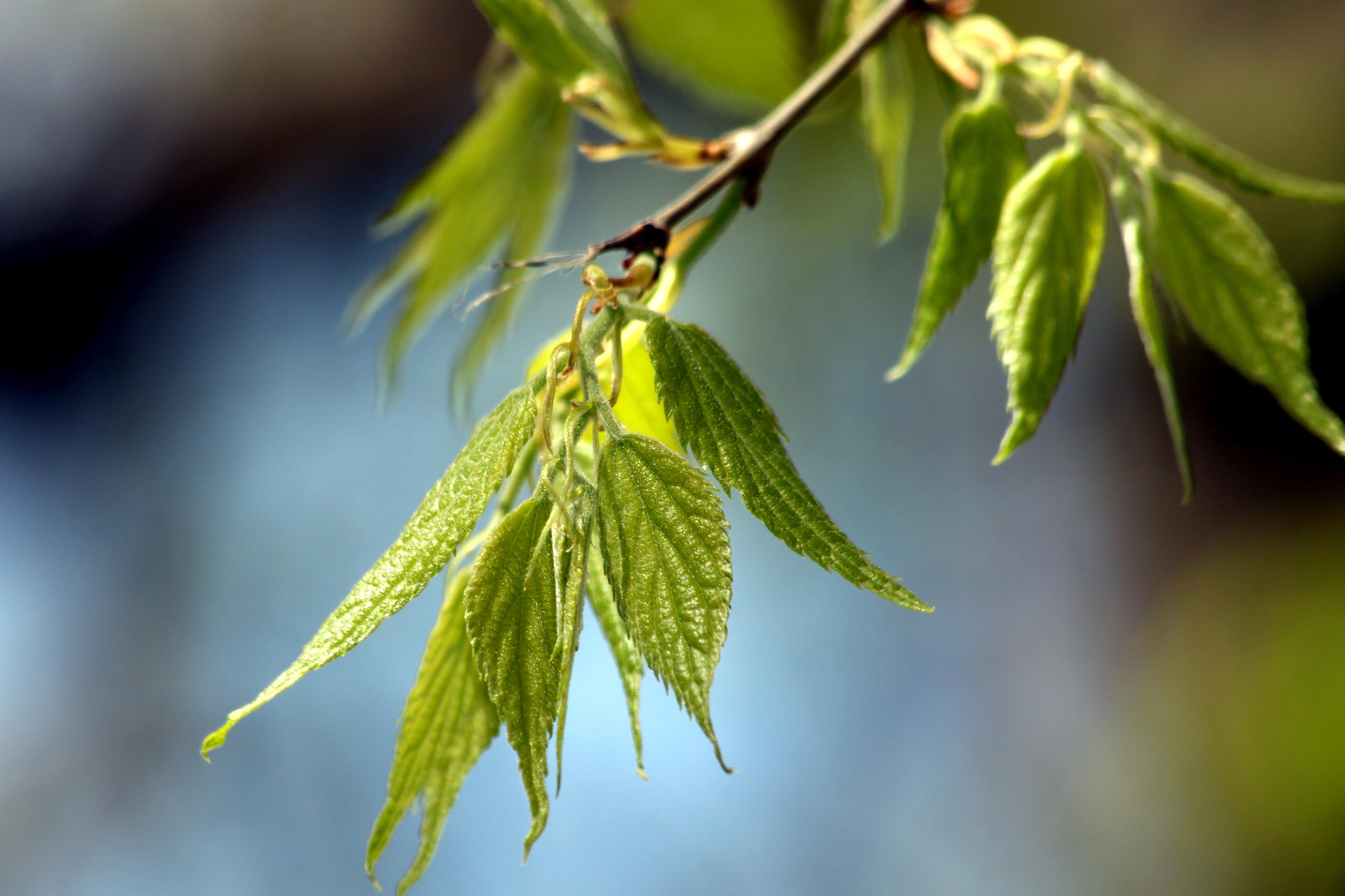 2500 fát ültetett ősszel a Főkert