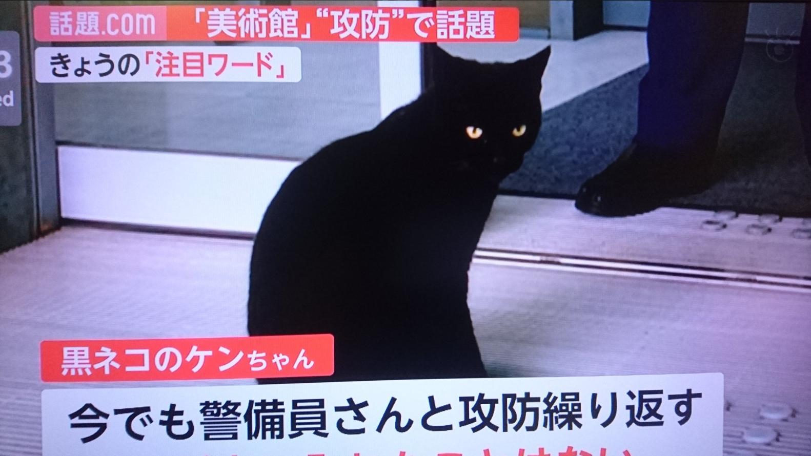 Egy fekete macska két éve próbál beosonni egy japán művészeti múzeumba