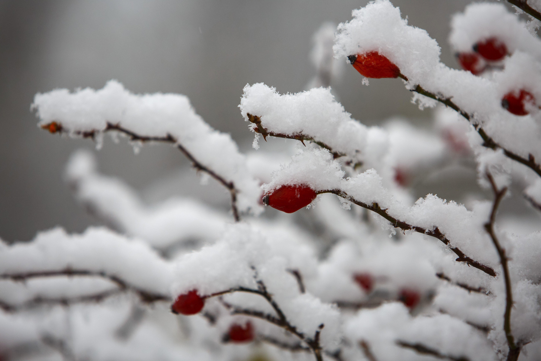 Megérkezett az első hó