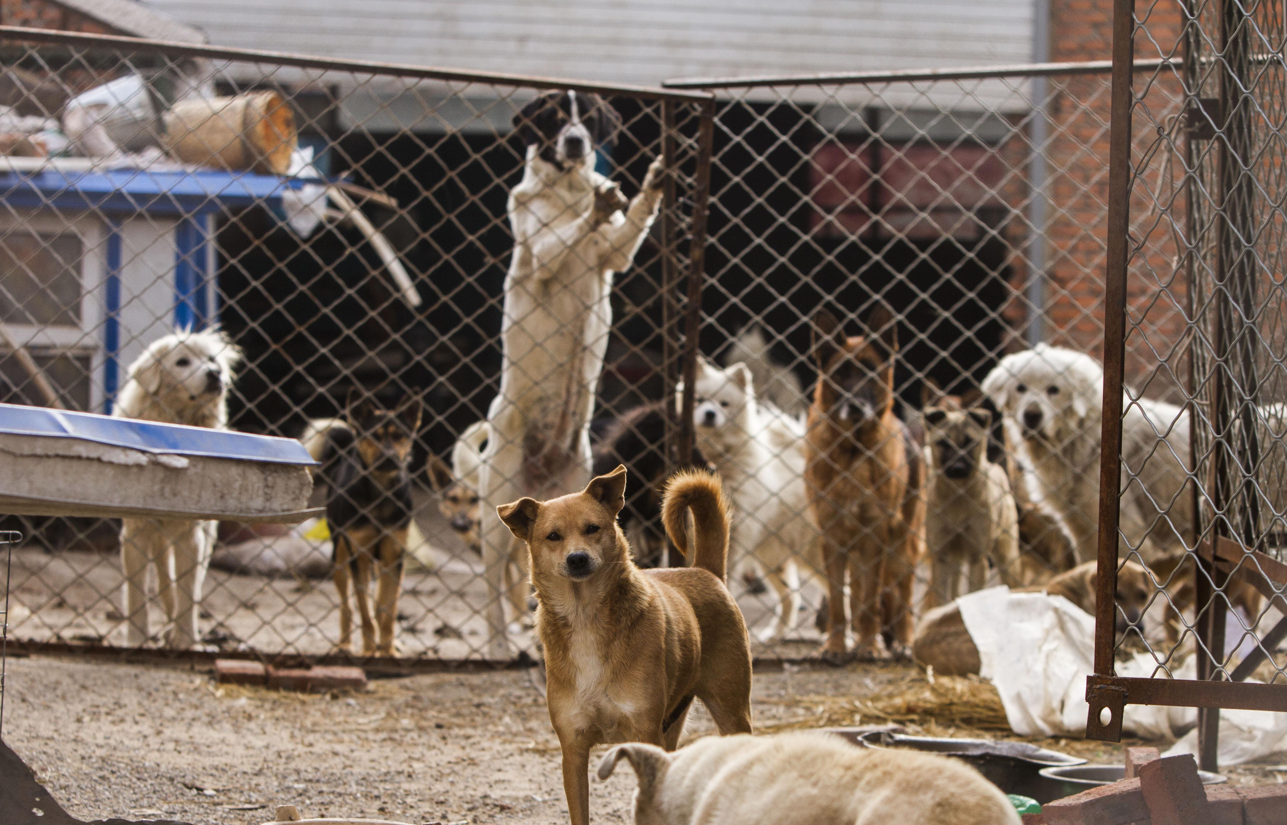 Felszámolják a legnagyobb kutyavágóhidat Dél-Koreában
