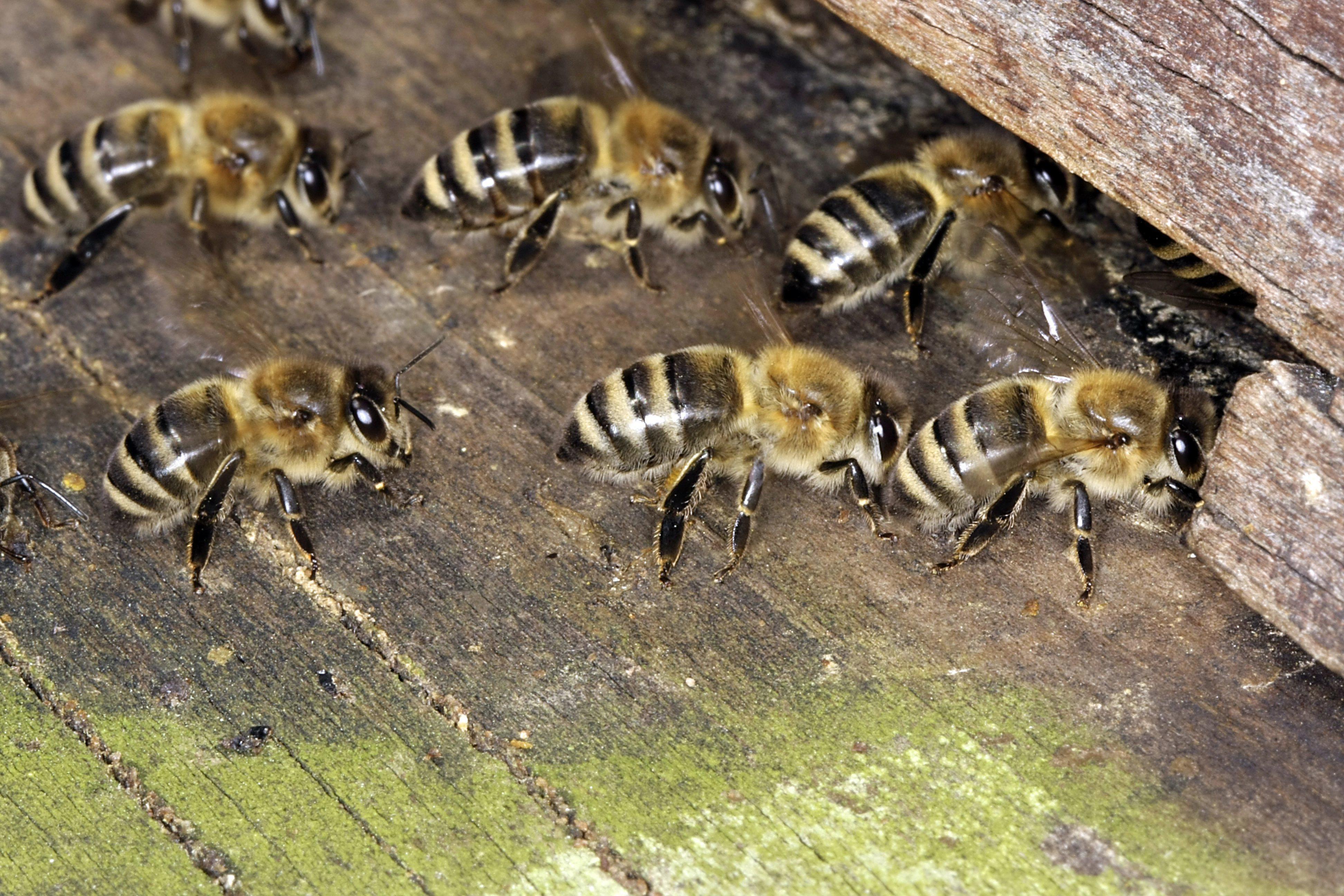 Kaptárokat lopott, majd meggondolta magát, ezzel megölte a méheket