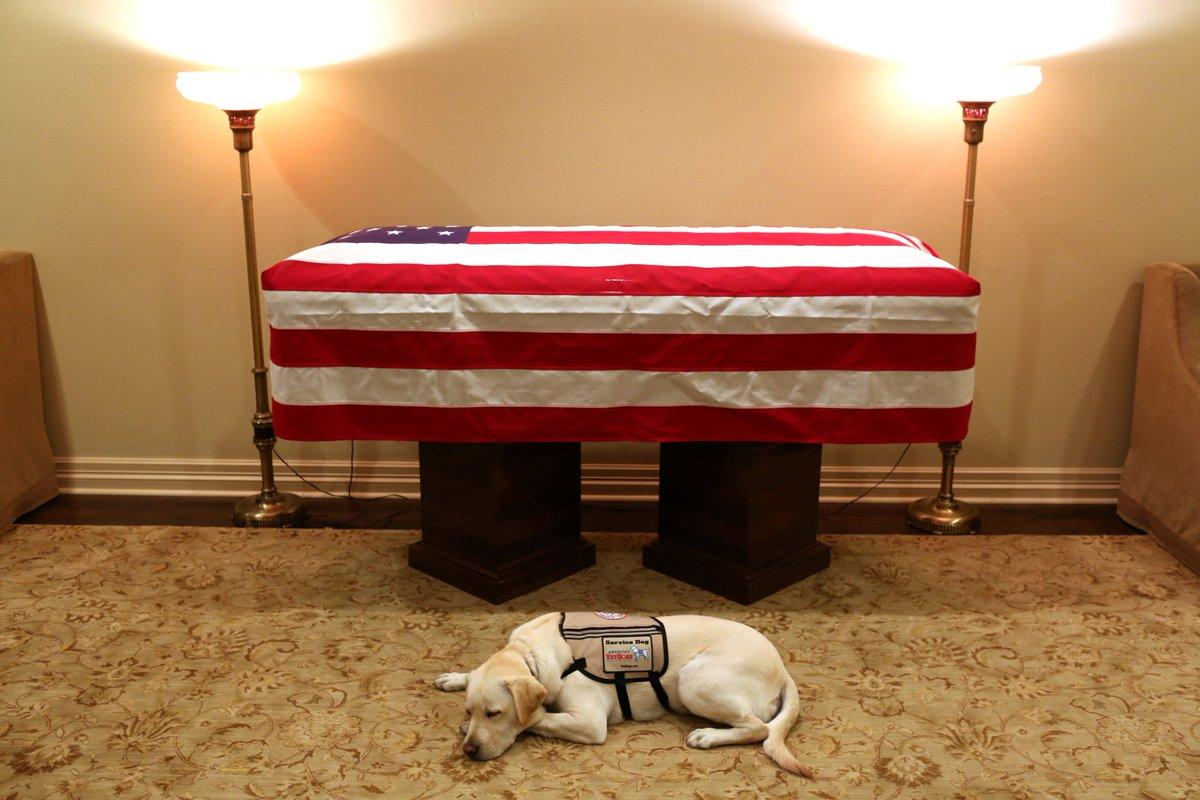 Munkát talált Sully, a néhai George H. W. Bush segítőkutyája