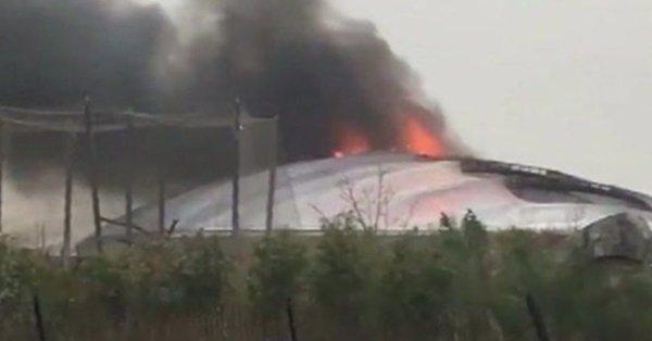 Tűz ütött ki a chesteri állatkertben, békák, halak, madarak estek áldozatul