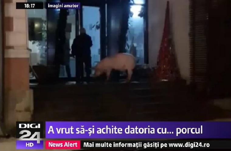 Egy román férfi disznóval fizette volna ki az adóhátralékát, pszichiátriára vitték