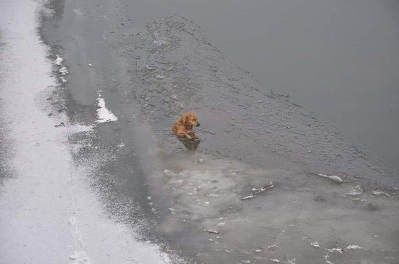 Kutyát mentettek ki a Zagyva folyó jegéből