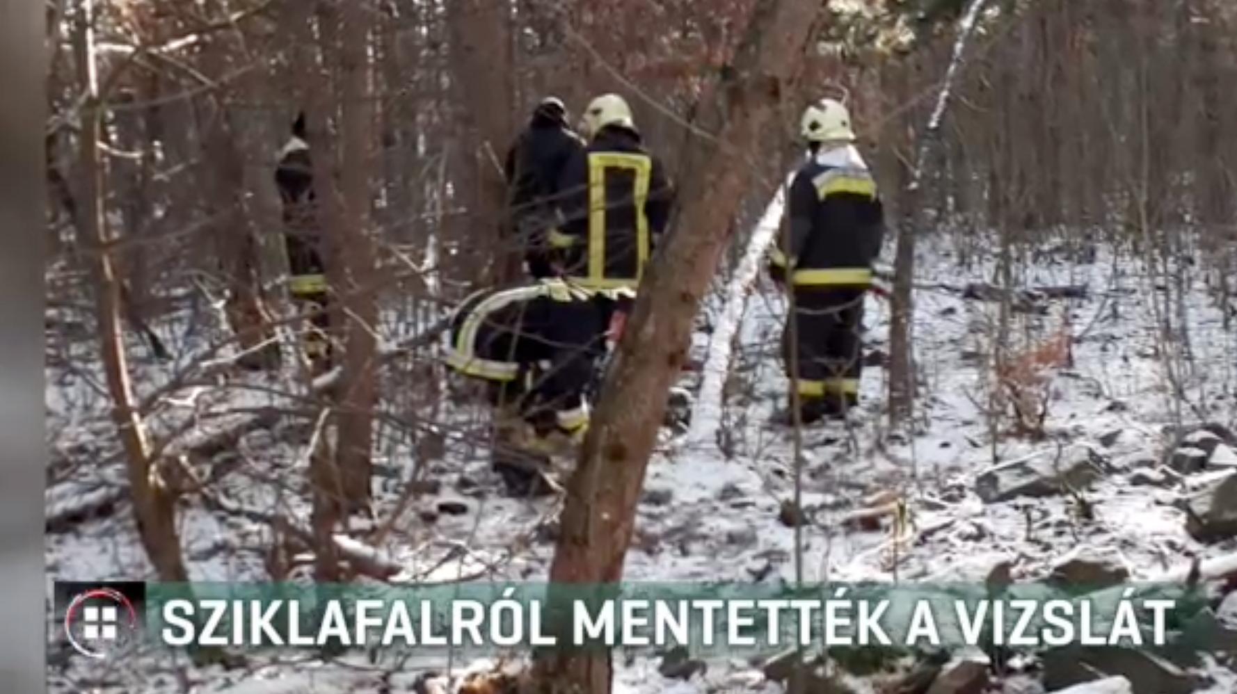 Alpinisták és tűzoltók mentették meg a vizslát, aki egy 30 méteres sziklafalra menekült a petárdák elől