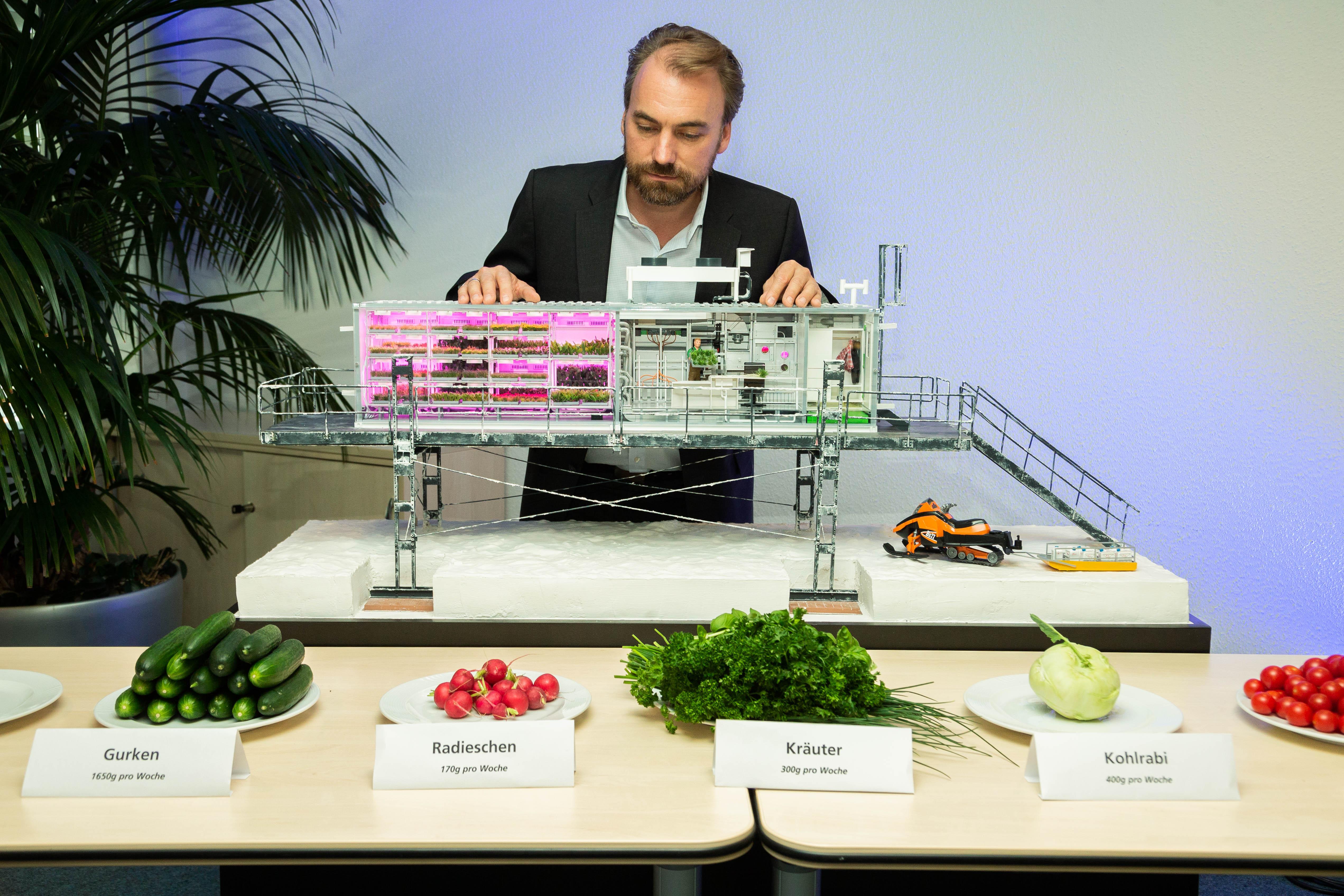 Csaknem három mázsa zöldséget takarítottak be a Német Űrközpont antarktiszi üvegházában