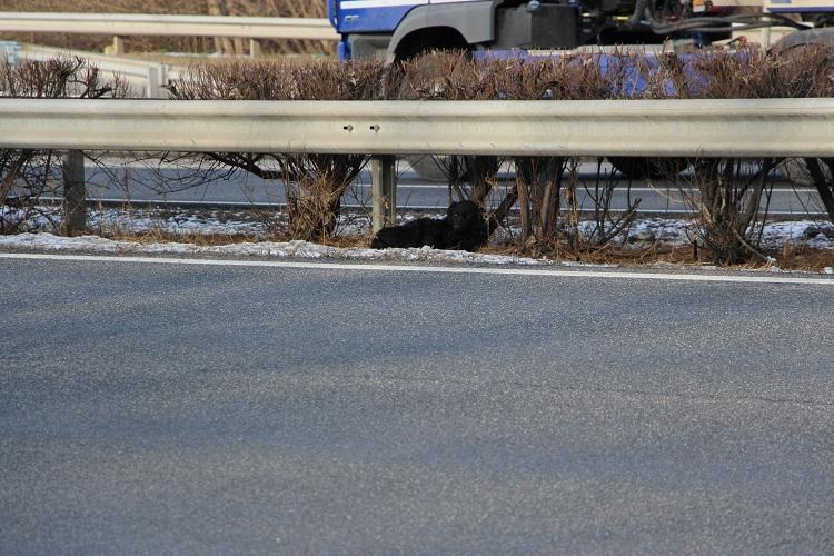 Foglyul ejtett egy kutyát az M1-es autópálya
