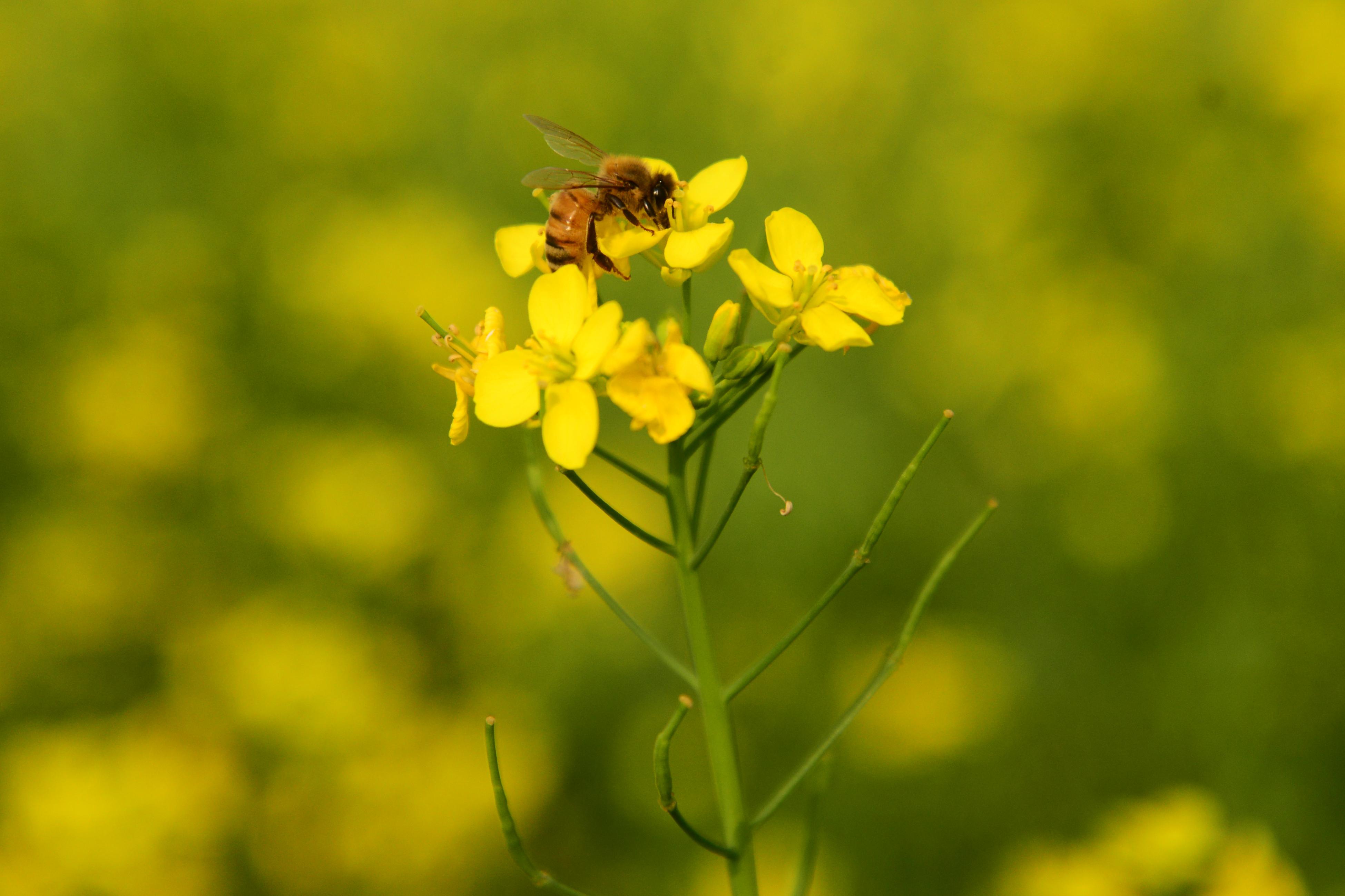 A méhek a gazdagokra utaznak