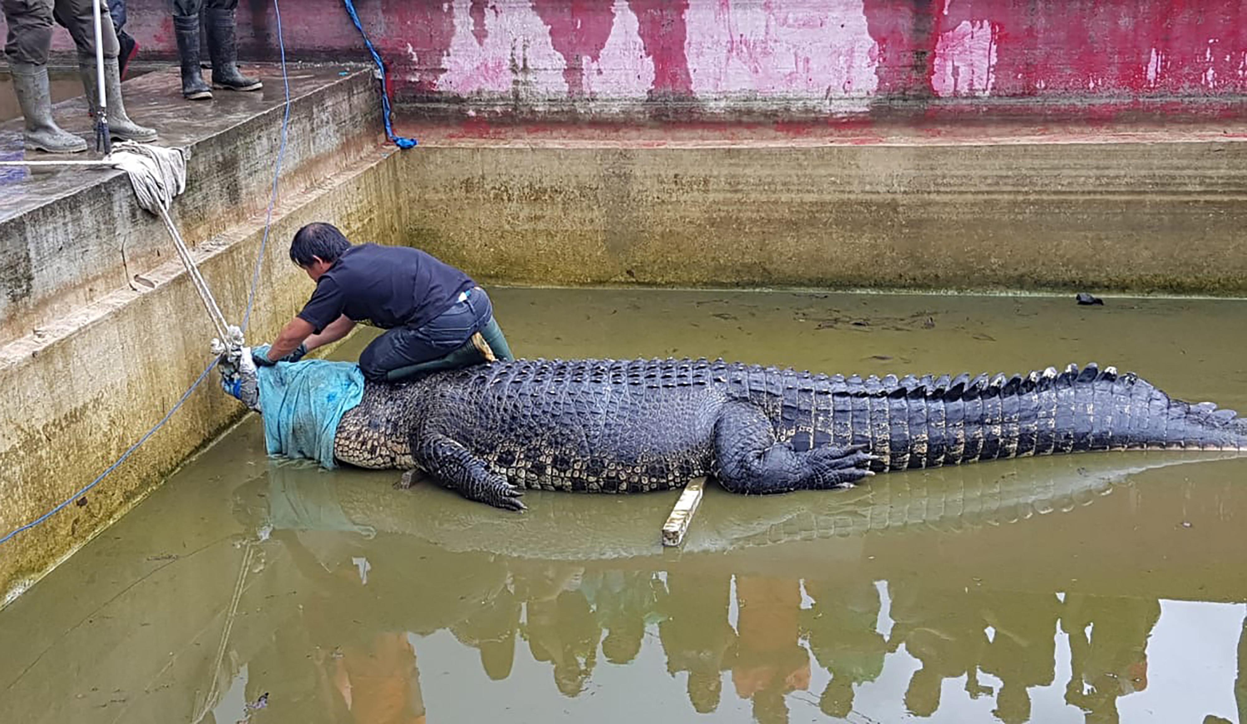Illegálisan tartott 700 kilós krokodil ölt meg egy nőt Indonéziában