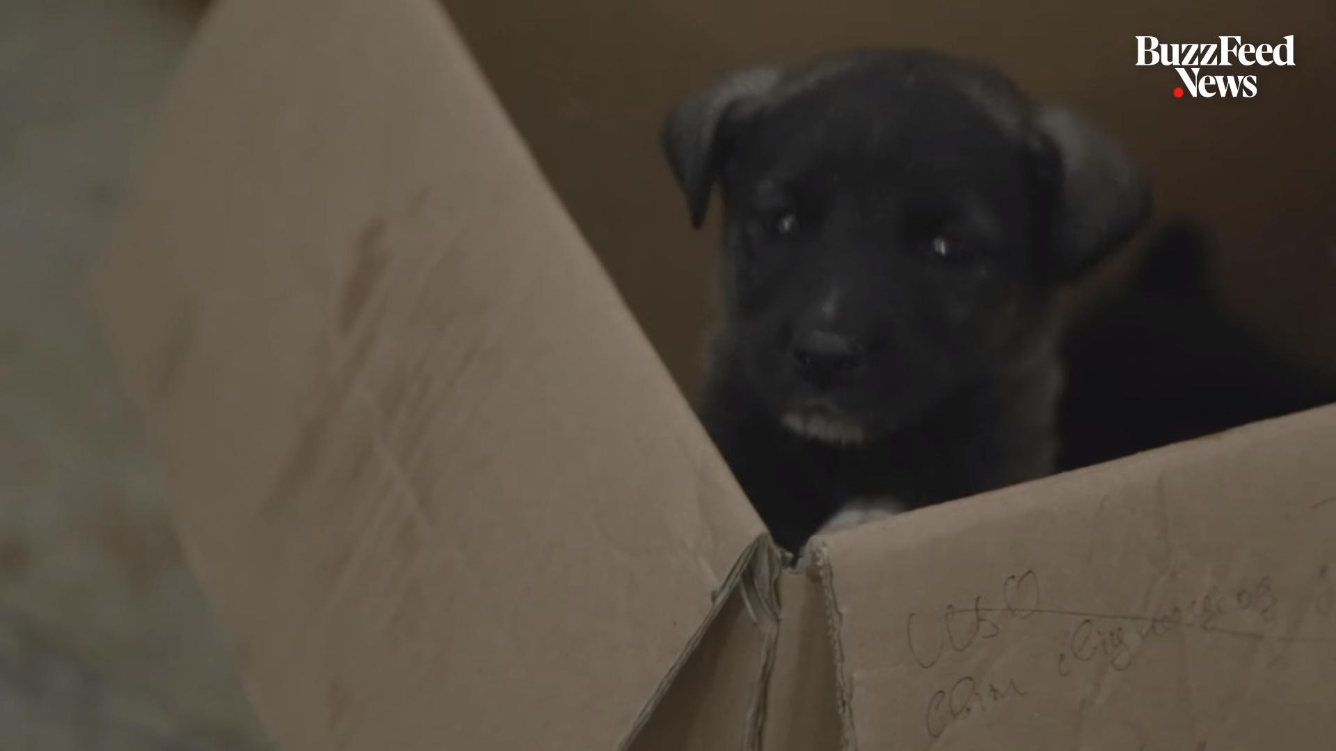 Amerikai és kanadai családok fogadtak be csernobili kutyákat