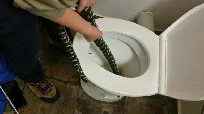 Éles harapást érzett, amikor leült a vécére, majd észrevette, hogy egy piton pihen a csészében