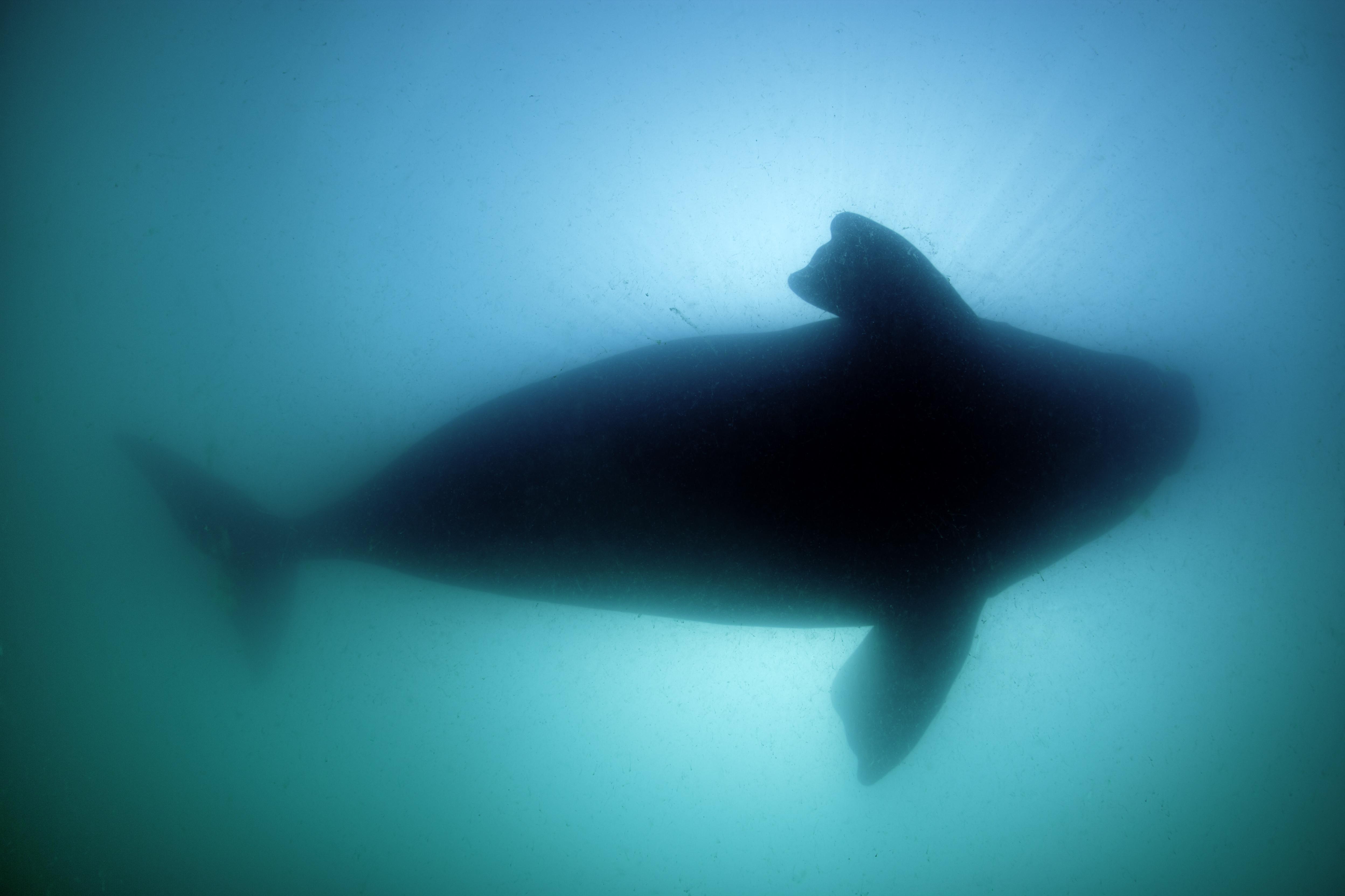 Halászhálóba gabalyodott egy bálnabébi az olasz partoknál, az anyja megpróbálta megmenteni, mindketten elpusztultak