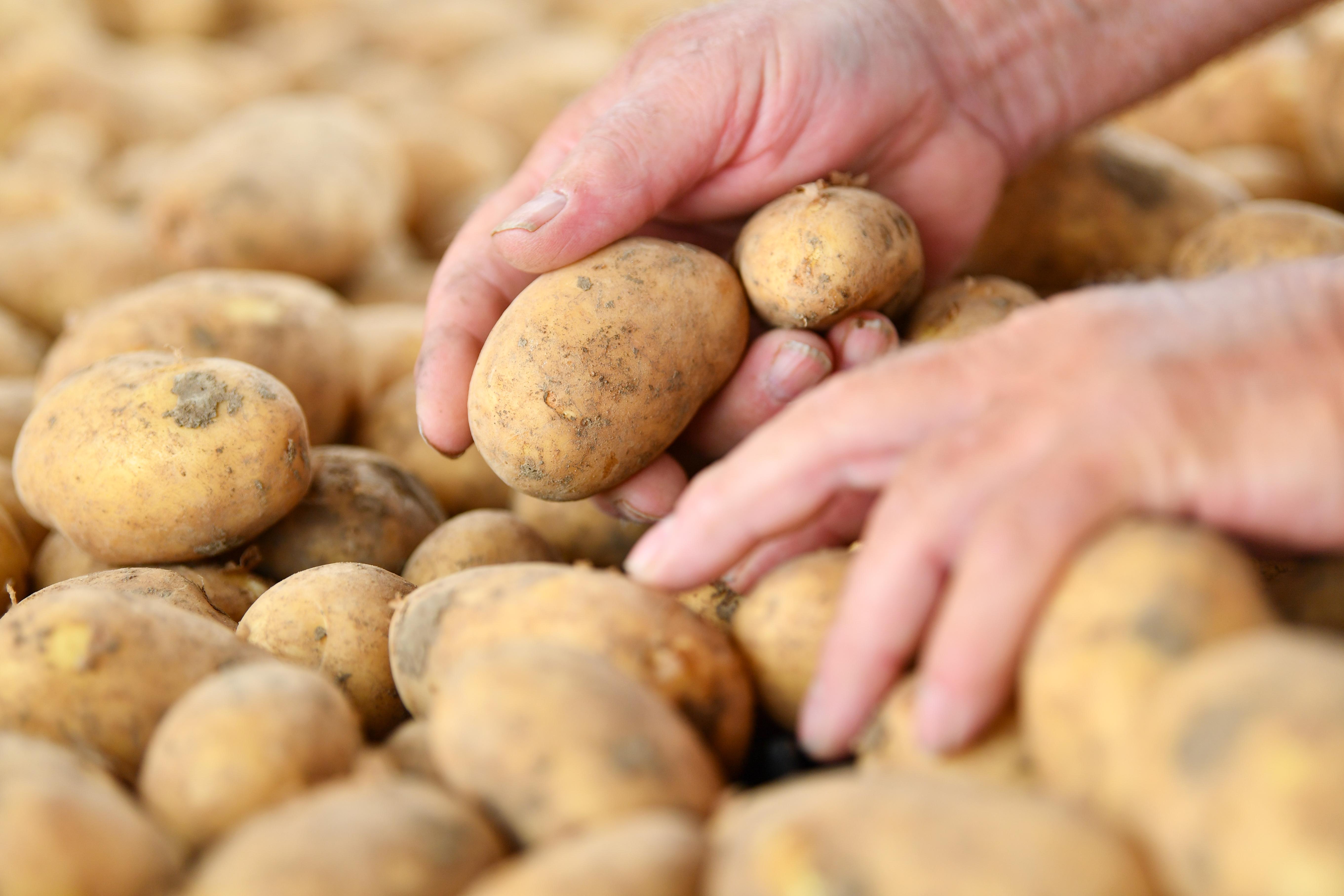 Elfogyott a magyar krumpli