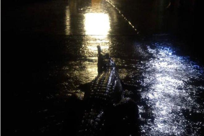 Umbuldáló krokodilok árasztottak el egy ausztrál várost