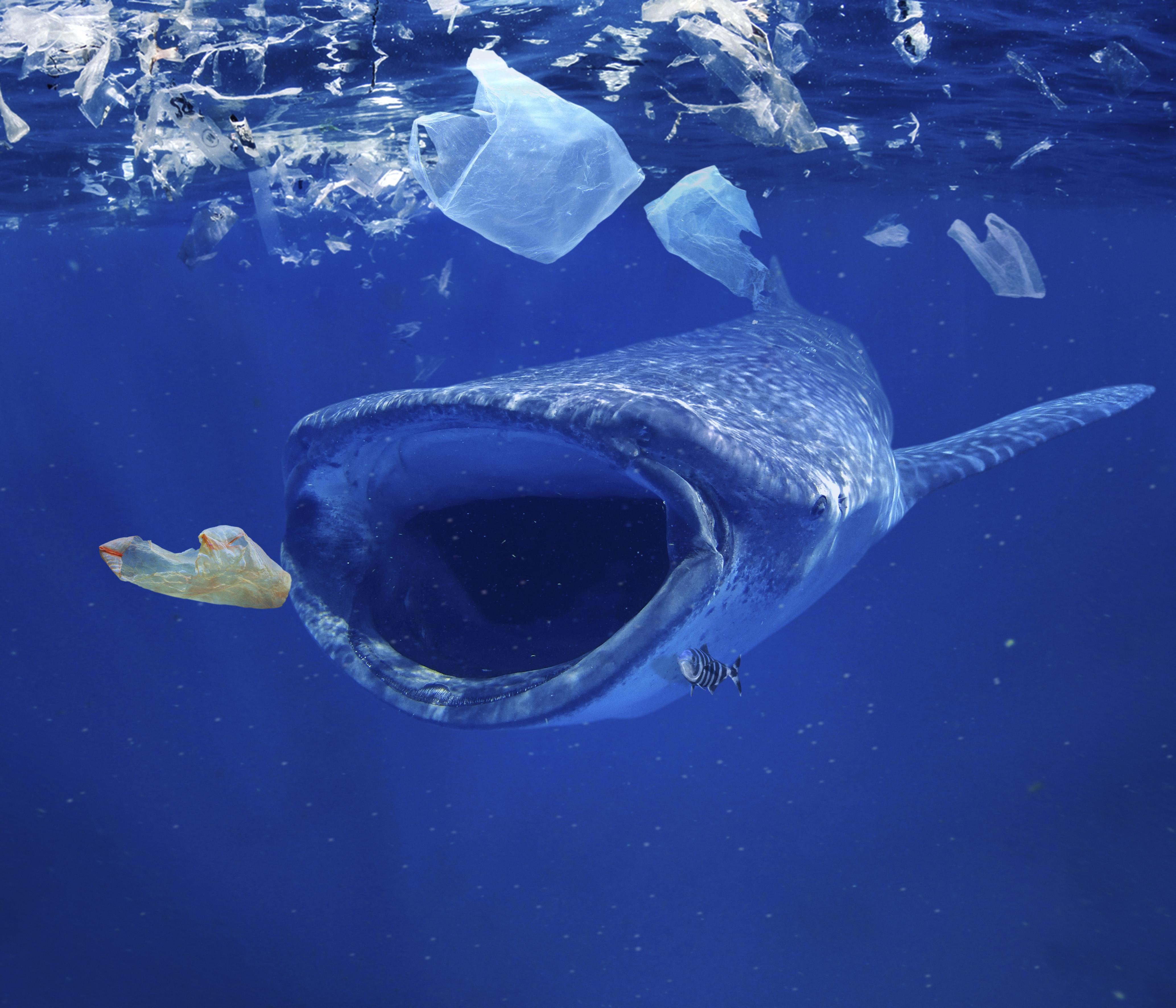 Minden partra vetődött tengeri emlősben találtak mikroműanyagot Nagy-Britanniában