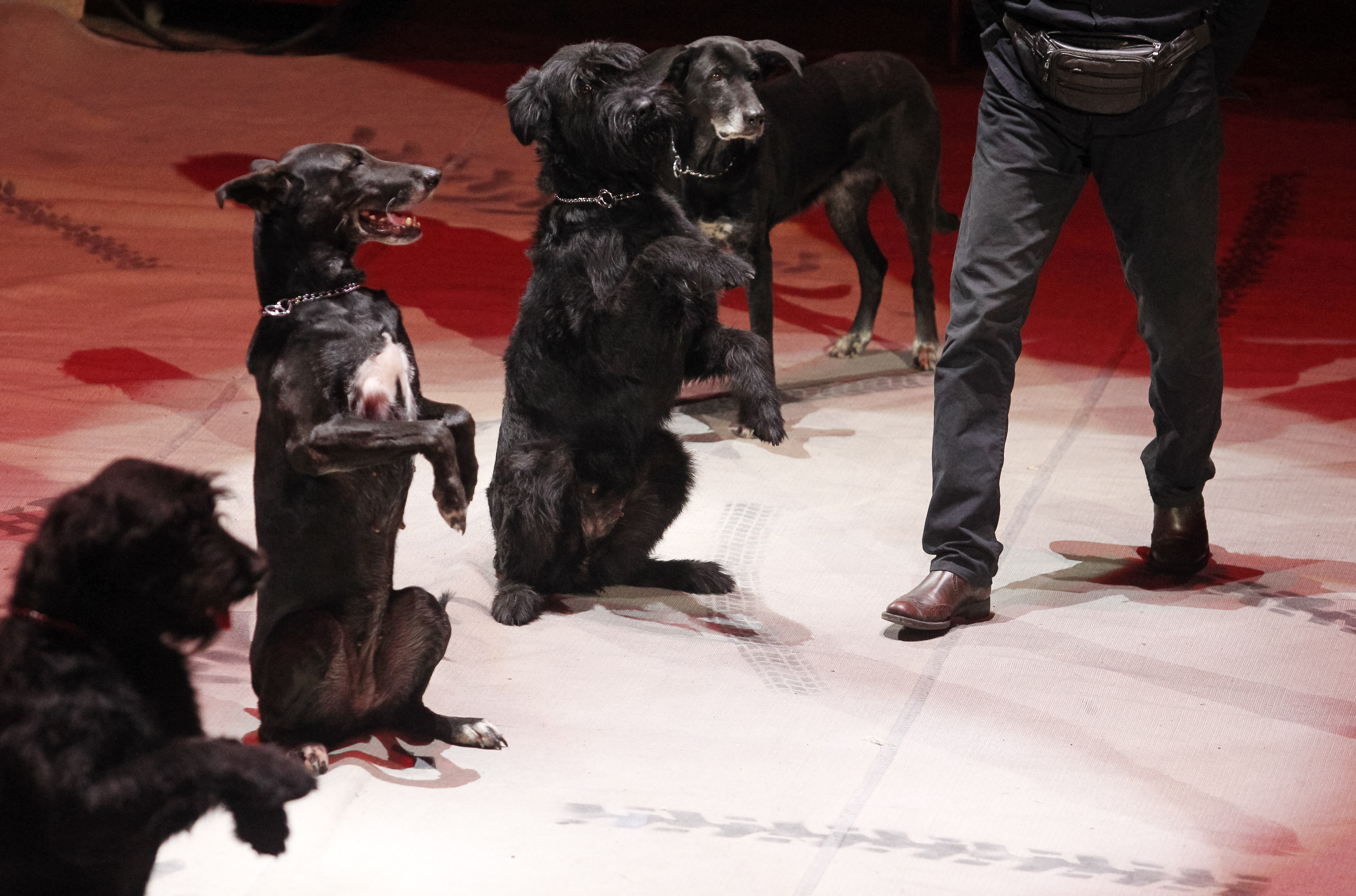 Külön Tindert fejlesztettek kutyáknak
