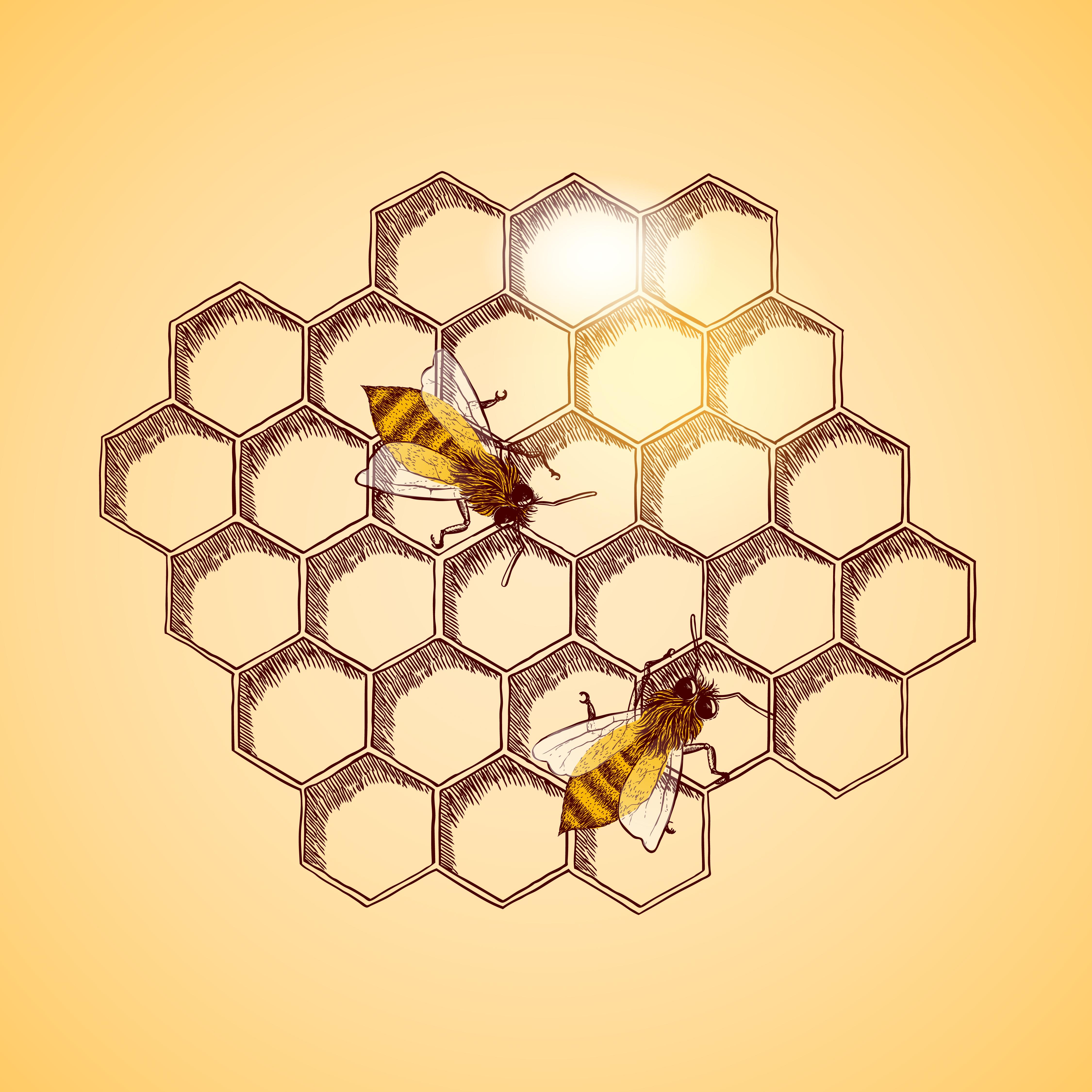 Nem igazán veszik külföldön a magyar mézet