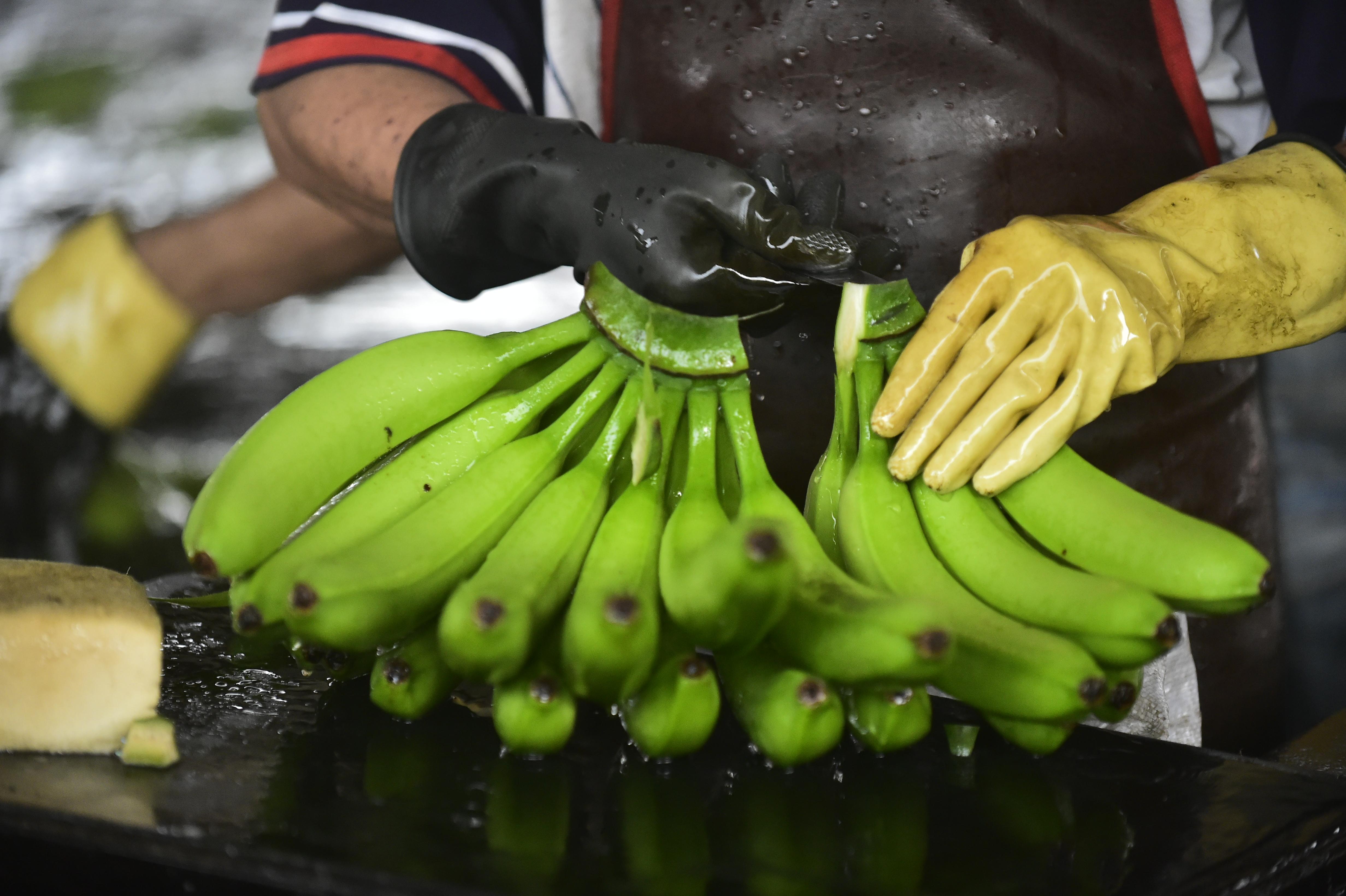 Két tonna kokaint juttattak be Európába banános dobozokban