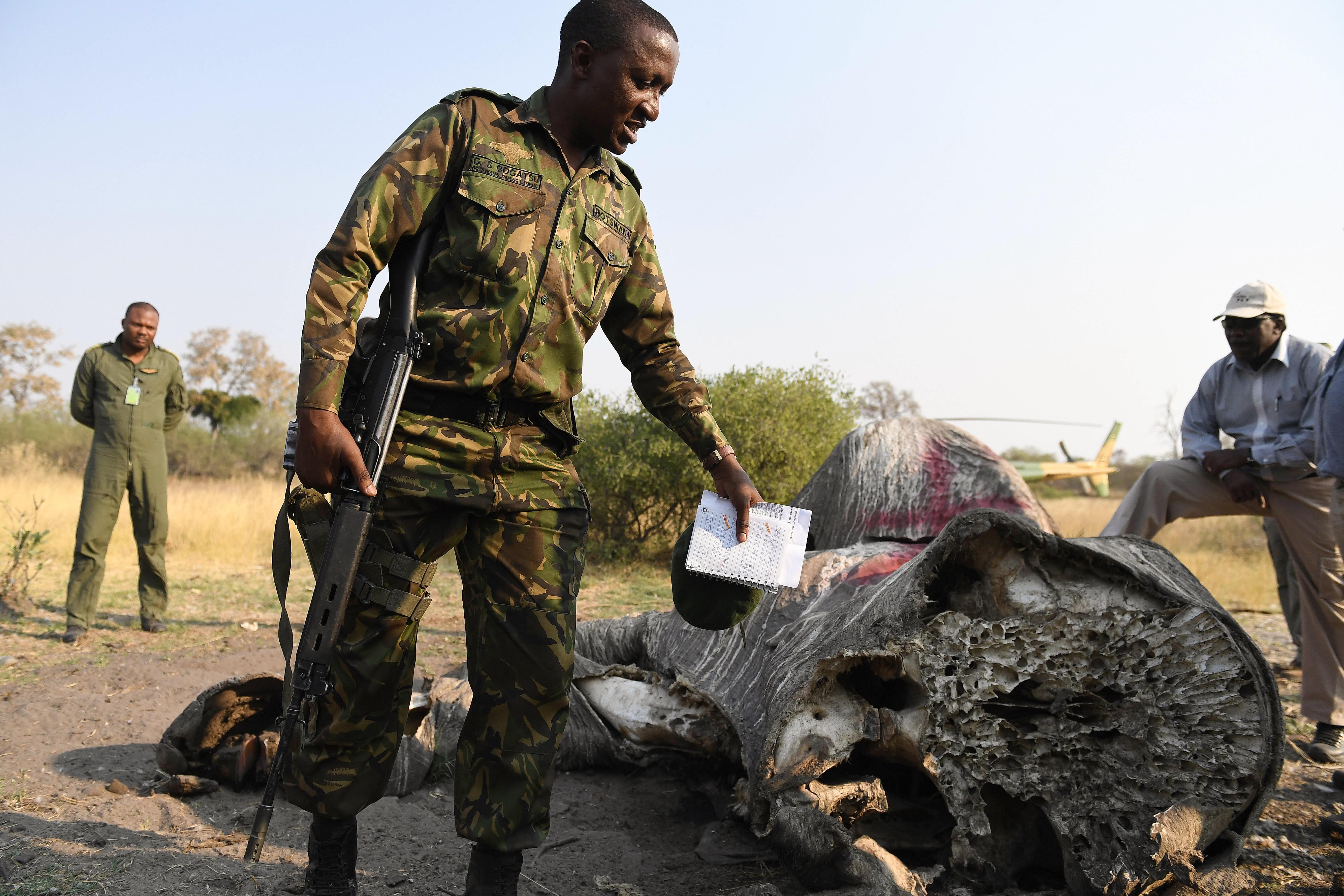 Feloldották az elefántvadászati tilalmat Botswanában