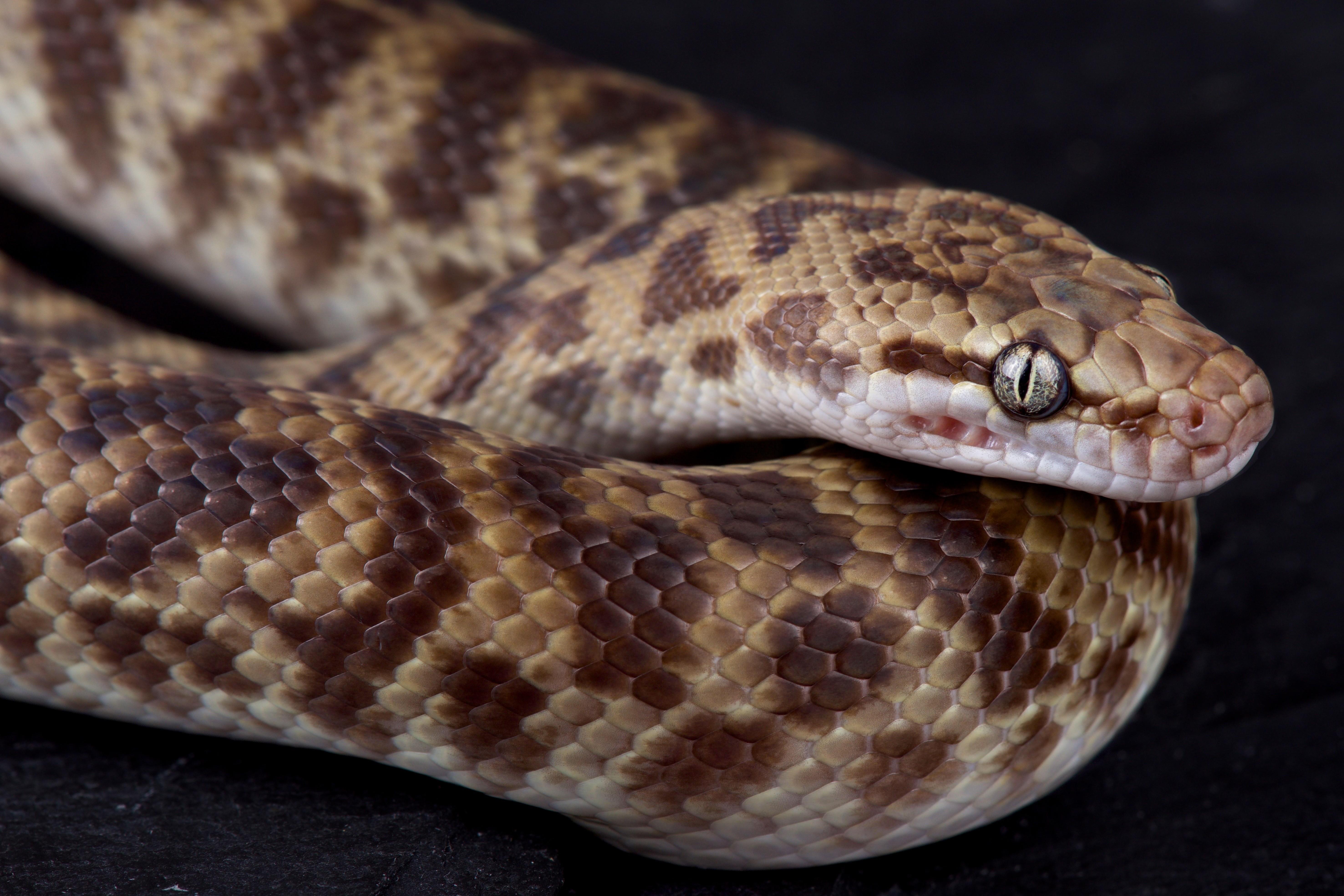 Hazarepült Ausztráliából, majd otthon egy kígyót talált a cipőjében