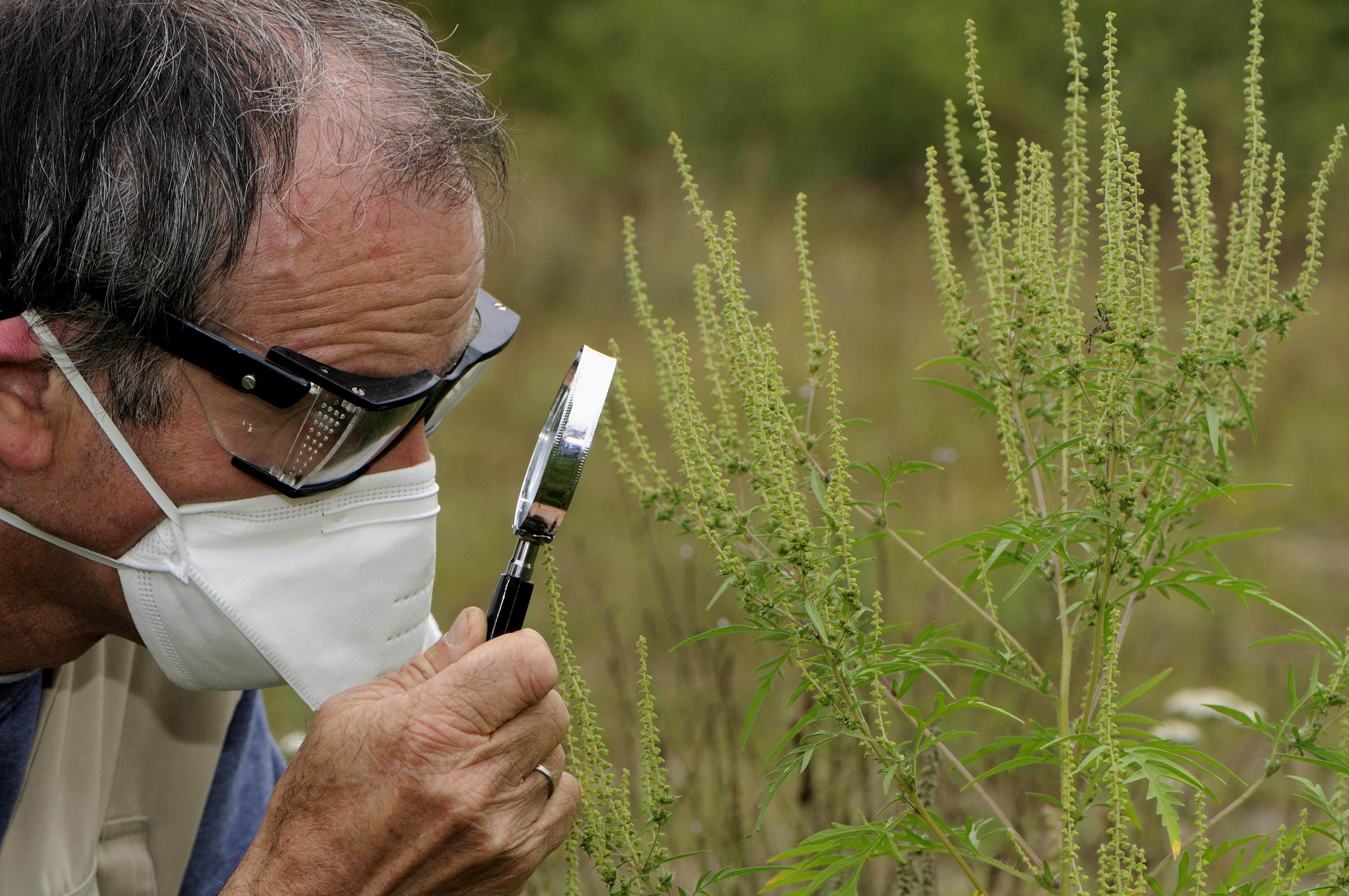 Decembertől kötelezően átvizsgálják majd a külföldről hazatérők csomagjait, hogy nem hoznak-e be valamilyen veszélyes növényt az országba