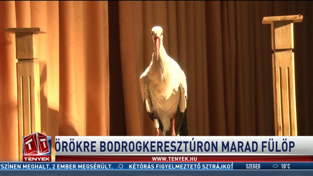 Tavaly elpusztult, idén kitömve vitte vissza a település gólyáját Révész Máriusz