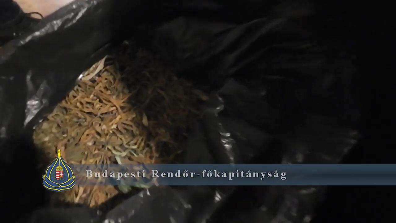 Újbuda központjában számoltak fel egy marihuánaültetvényt