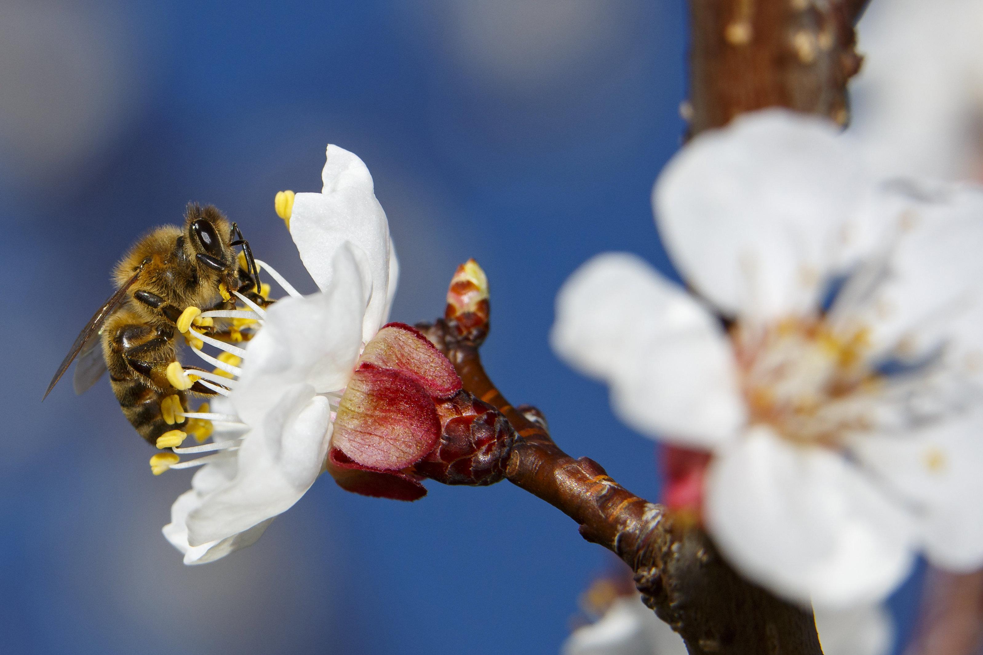 Félmillió rovarfaj sodródott a kihalás szélére