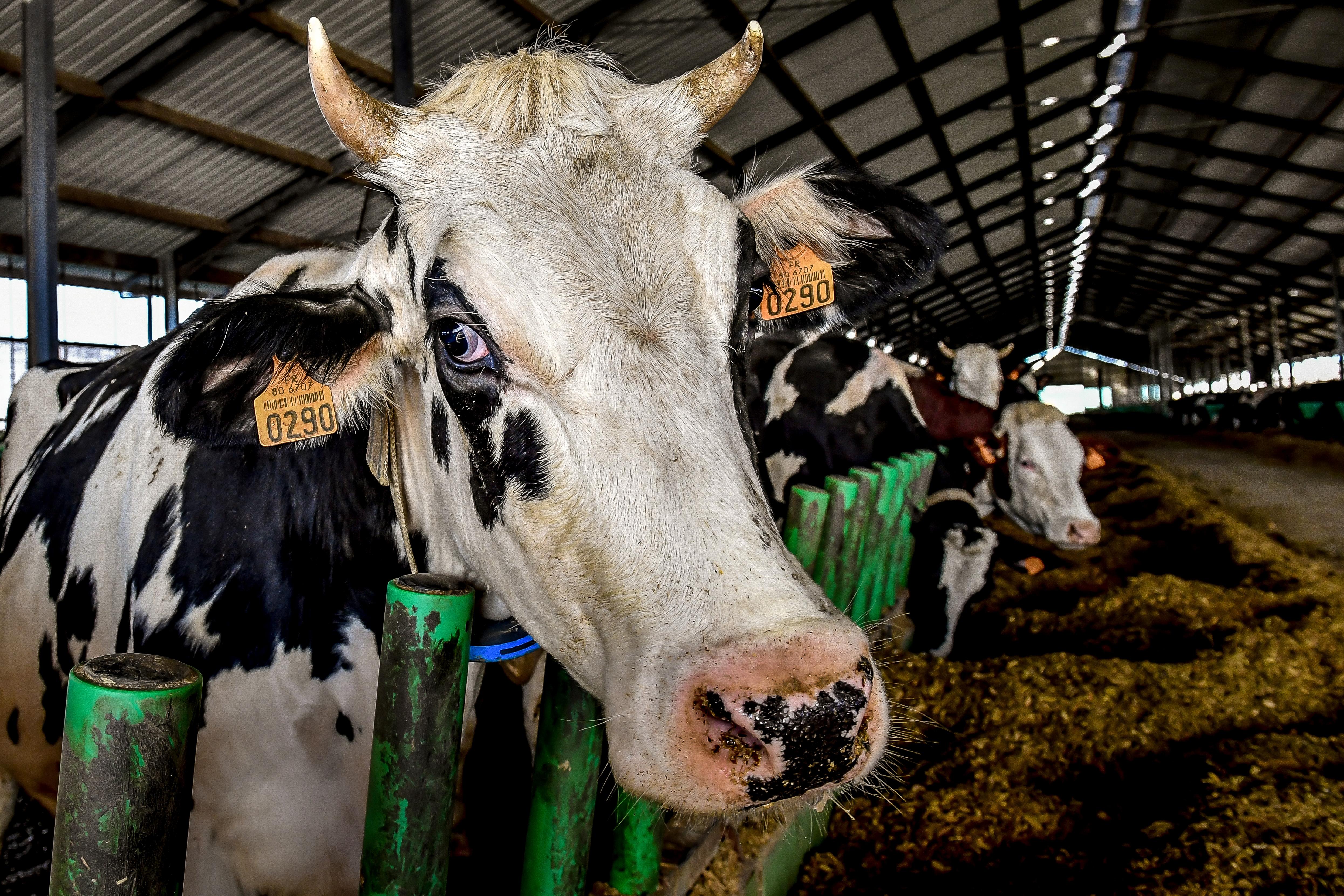 Kiakadt a tejszakma az olcsó penny-s importtej miatt