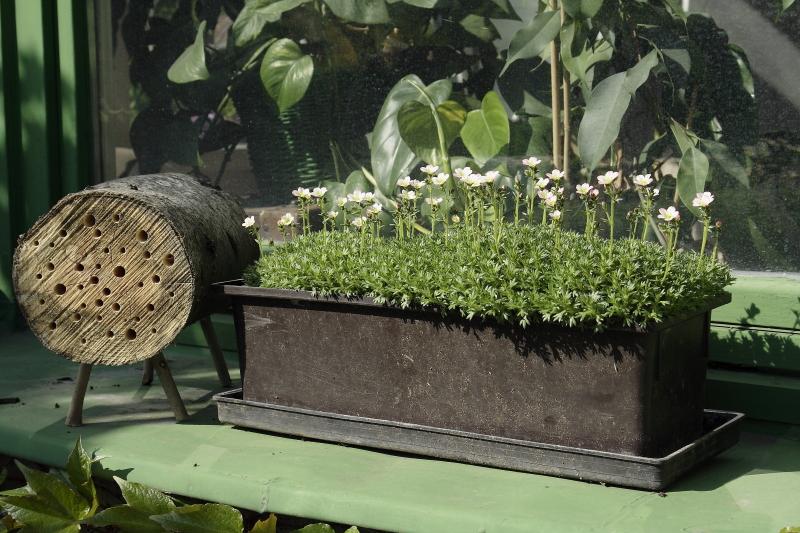 Házi készítésű méhecskehotellel is segíthetjük a méhek megmaradását