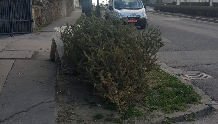 Most már miért nem lehetett megtartani ezt a fát karácsonyig?
