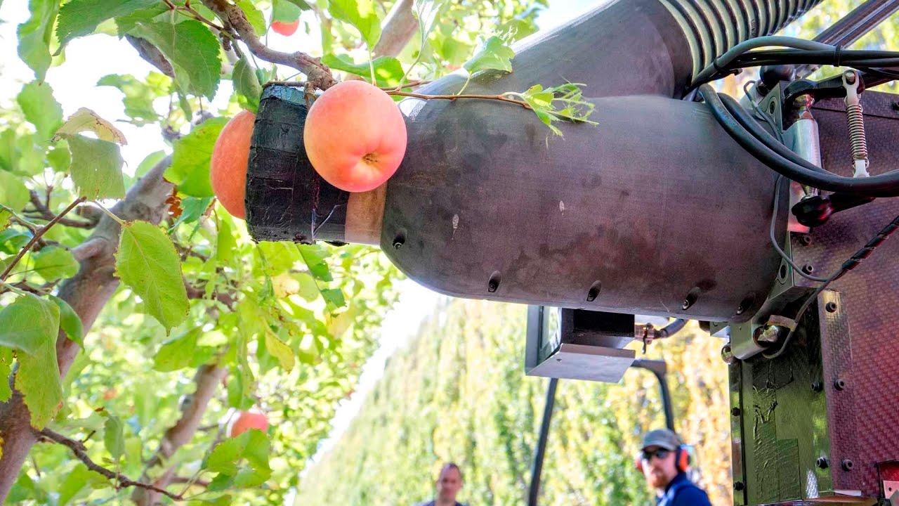 Munkába állt az első almaszedő robot Új-Zélandon