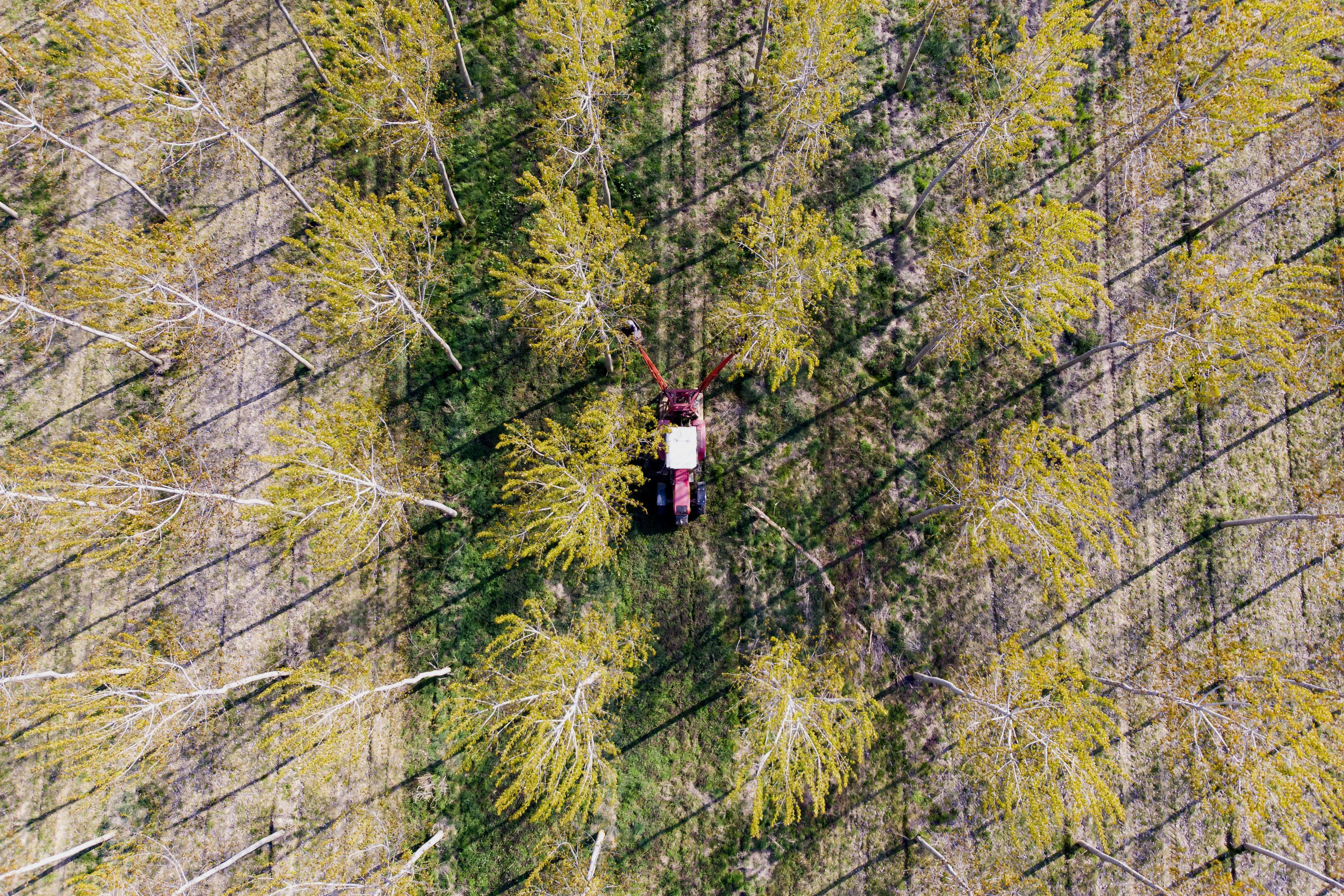 Végeláthatatlan erdő, magasba nyújtózkodó traktor
