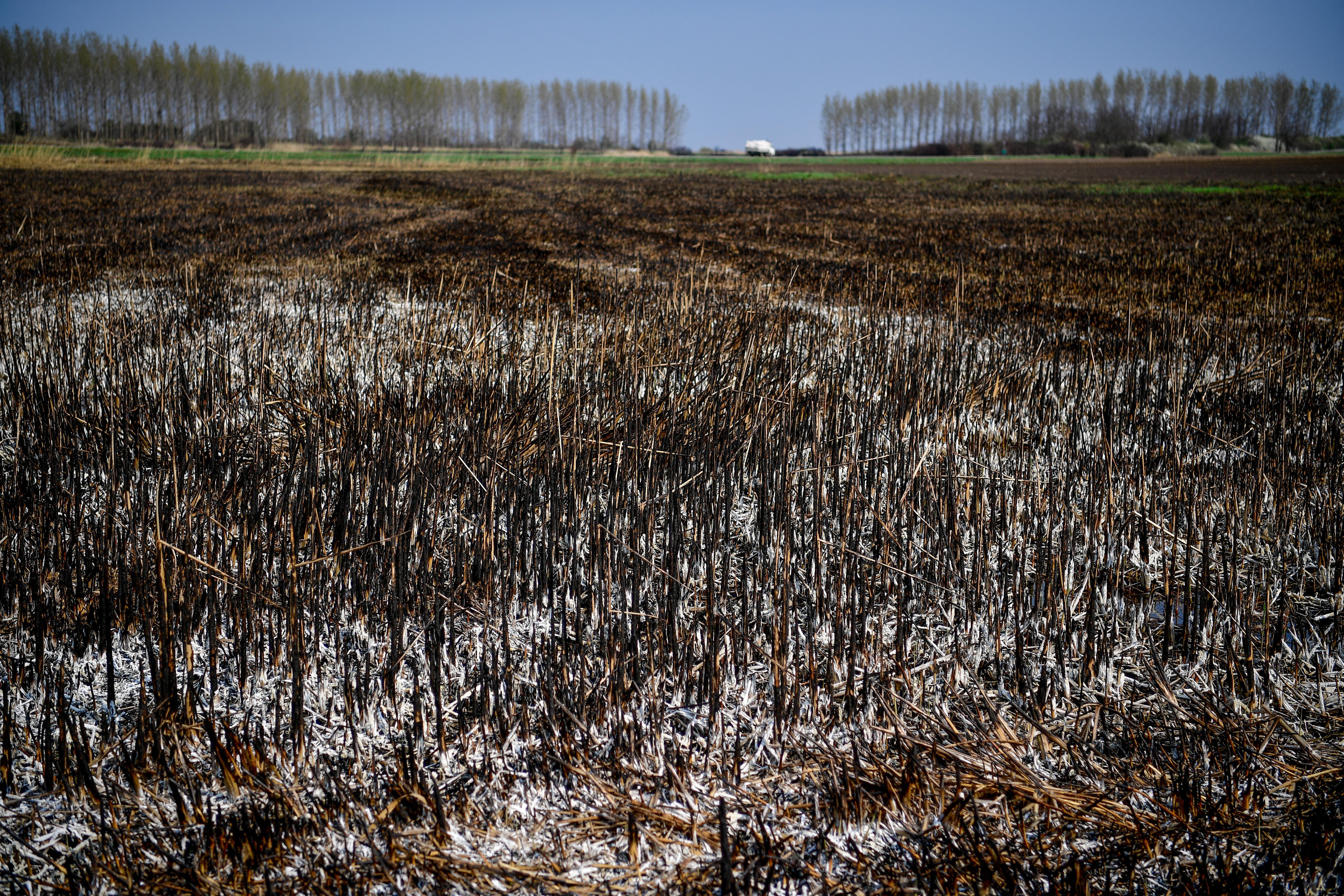 Legalább a kalászos gabona 30 százaléka kárba veszhetett az aszály miatt