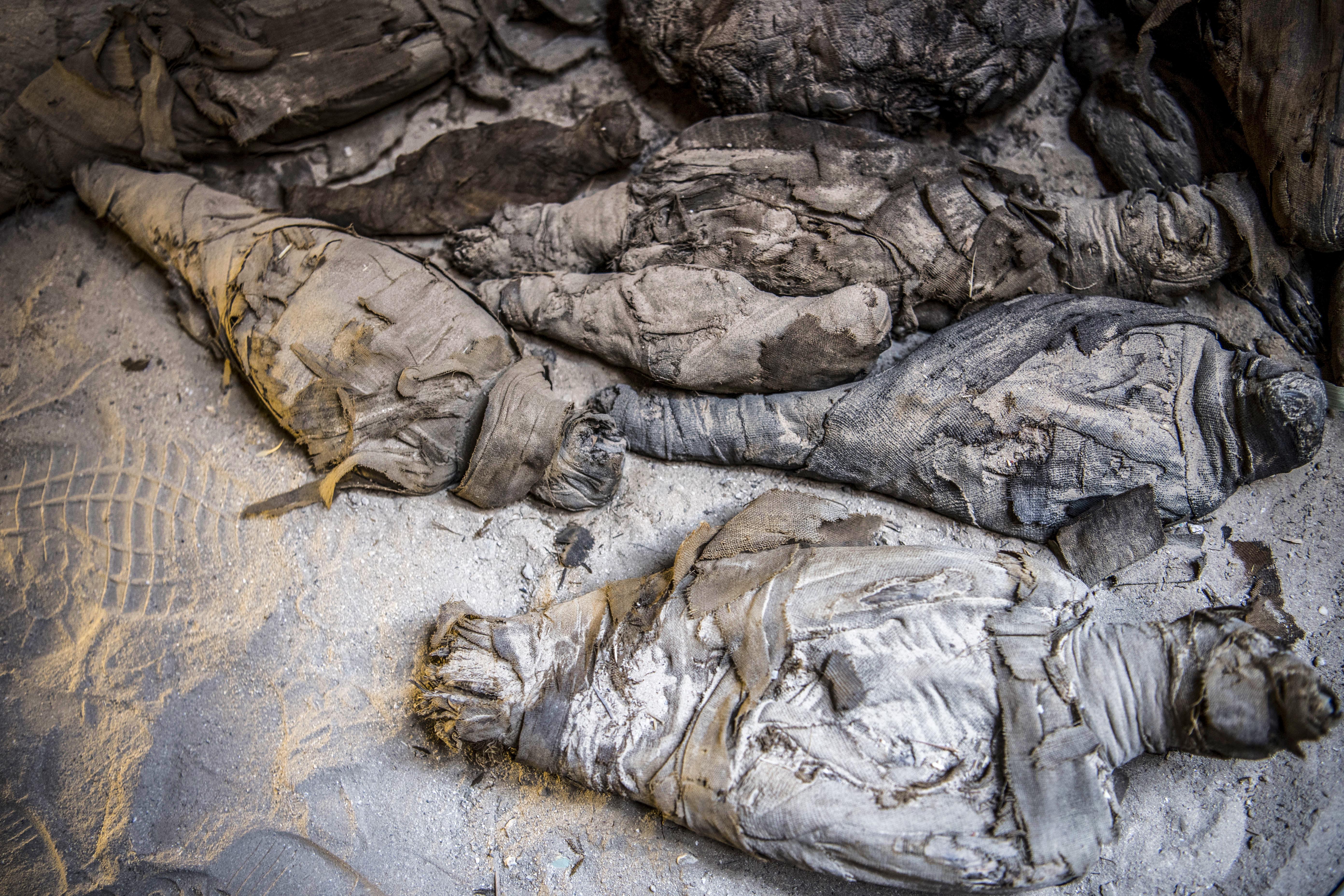 Mumifikált állatokat találtak egy óegyiptomi sírban