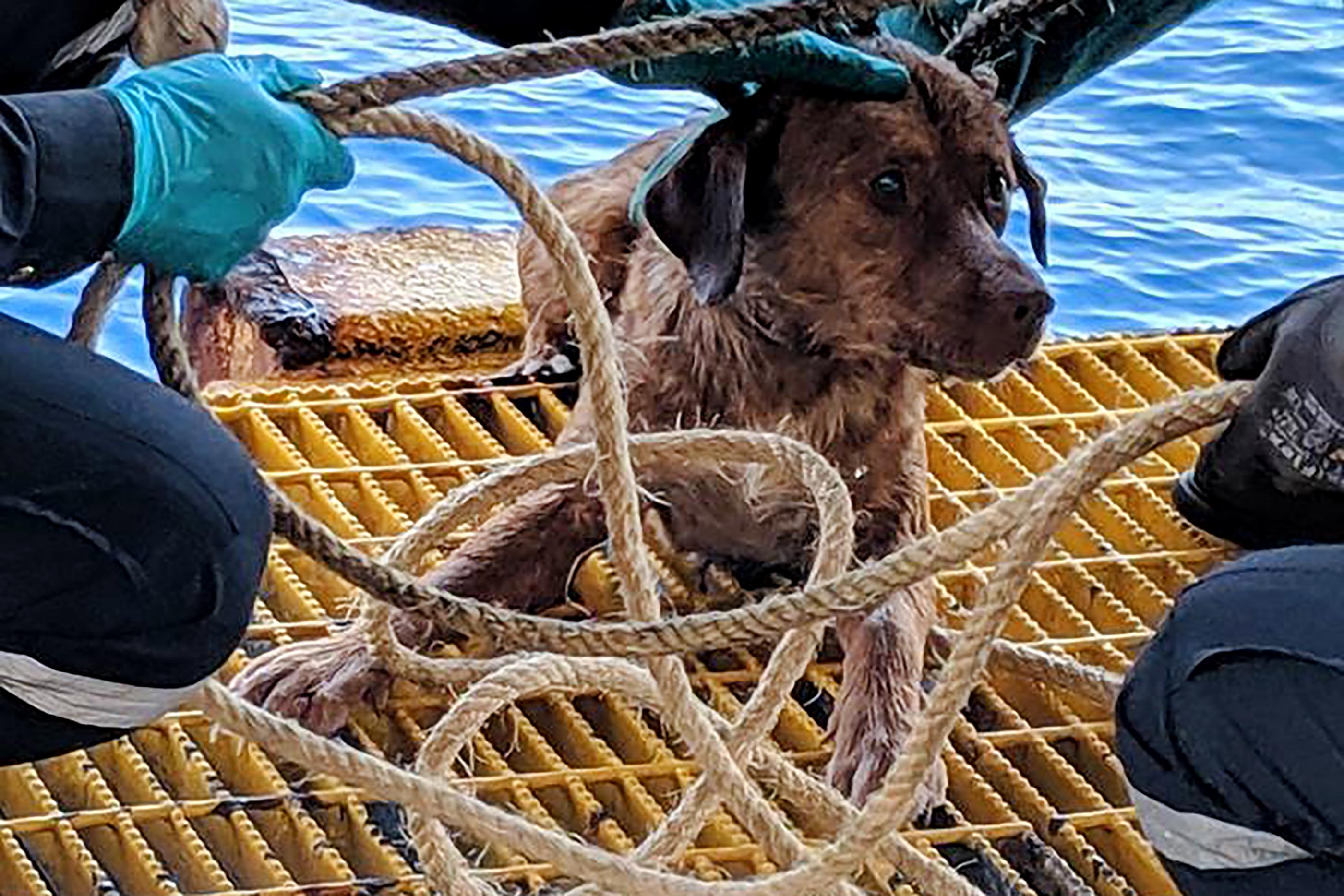 Olajfúrók találtak egy kutyát a tenger közepén, 220 kilométerre a parttól