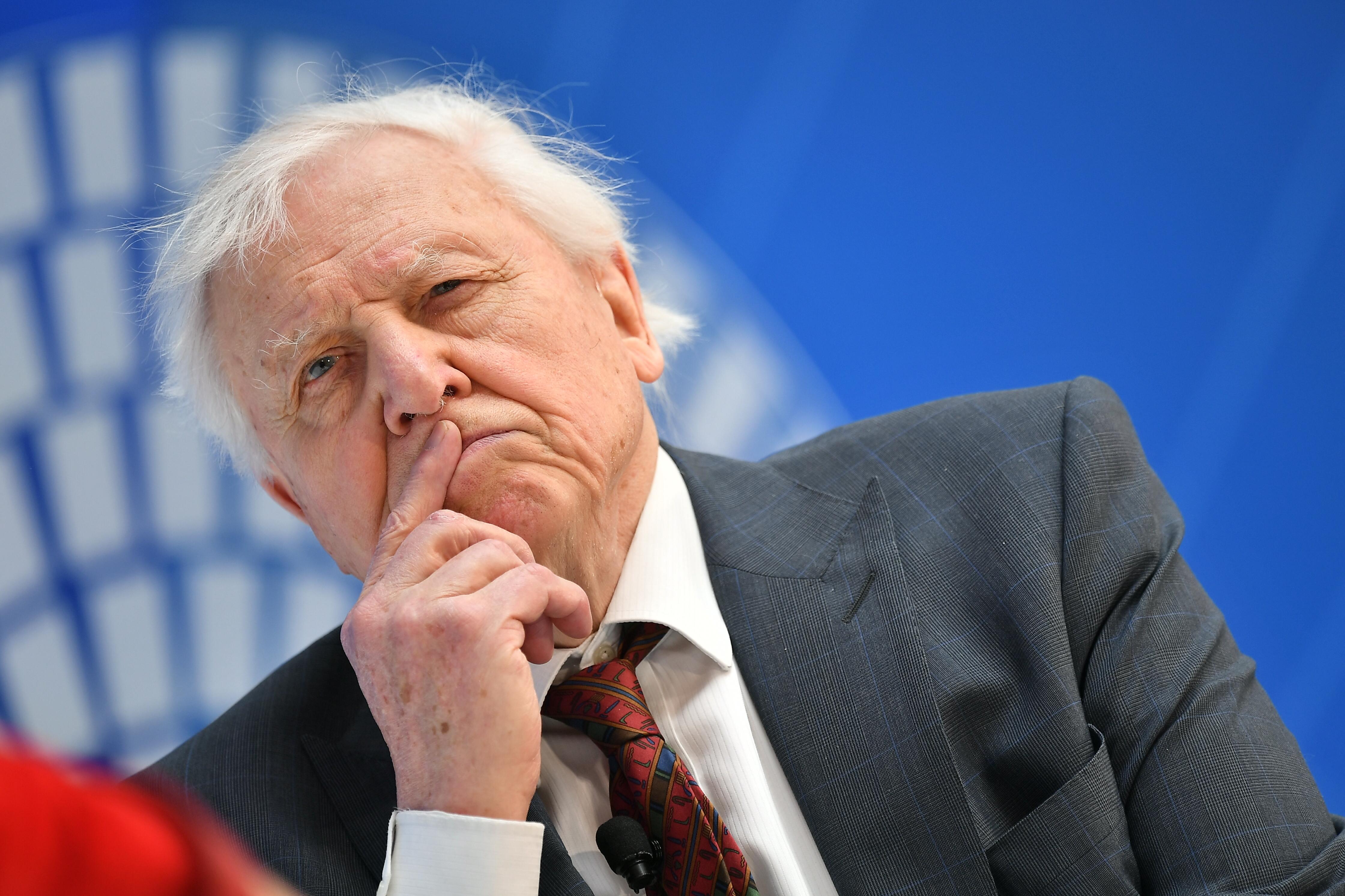 Madárcsicsergéssel szórakoztatta magát Sir David Attenborough a karantén idején