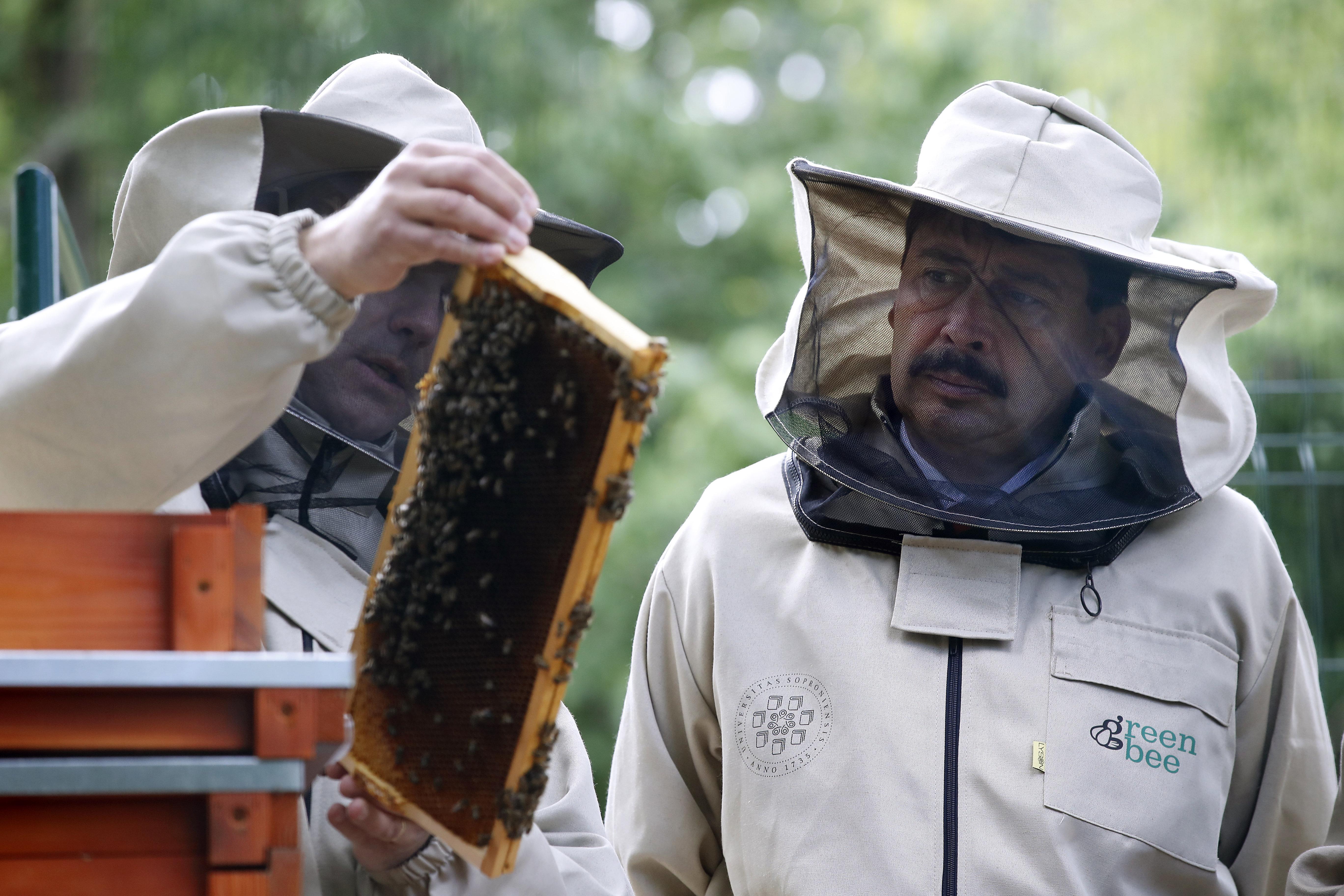 Áder a méhek életét tanulmányozó biomonitoring-rendszerrel ismerkedett