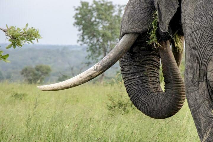 Az orvvadászok ellen küzdött egy brit katona Malawiban, amikor megölte egy elefánt