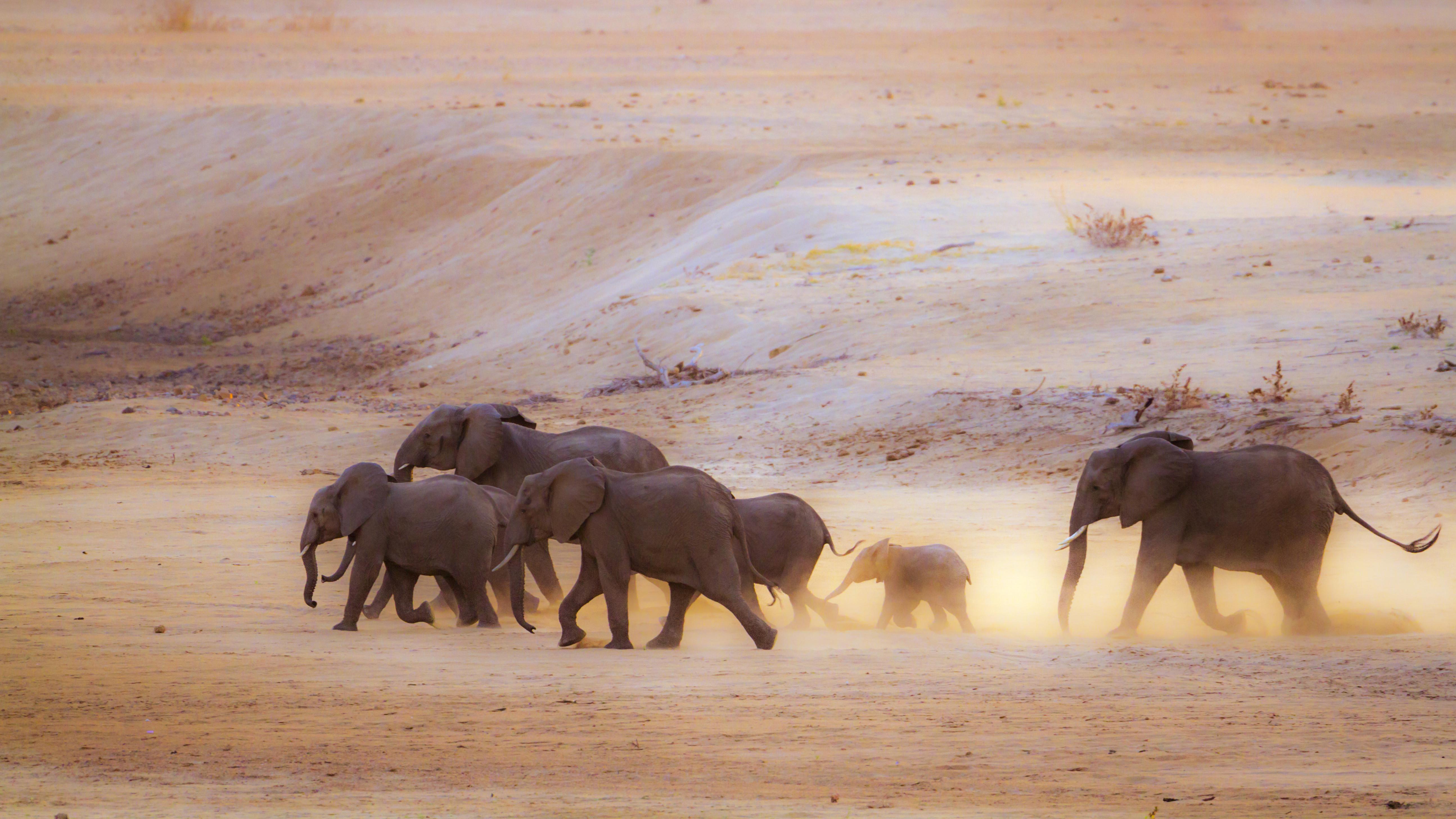 Botswanában újra lehet elefántokra vadászni