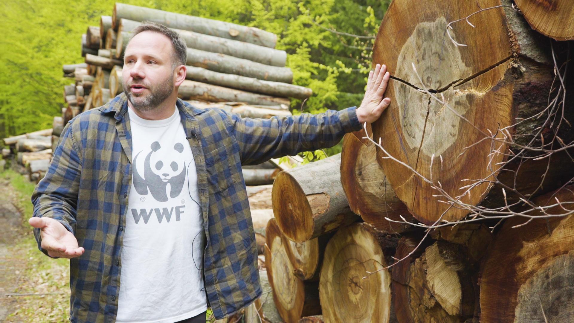 Hiába állnak védett területen az ország legöregebb fái, bármikor gond nélkül kivághatják őket