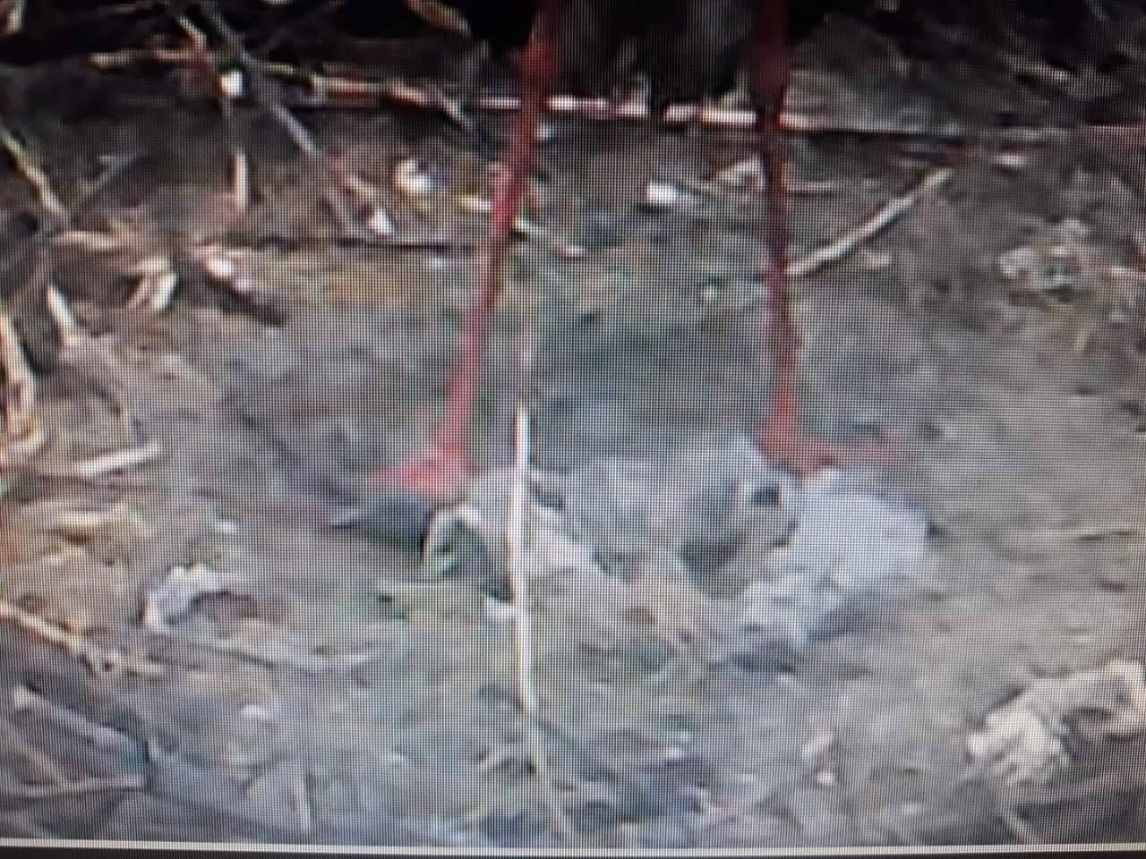 Tombolva csaptak össze a moralizáló kommentelők, a szélsőséges madárvédők és a nemzeti park a Bogyiszlón meghalt 5 gólyafióka miatt