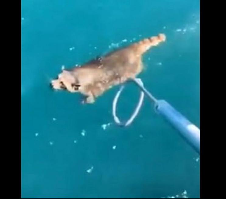 Egy floridai ügyvéd talált a csónakján egy potyautas mosómedvét, belekergette a tengerbe és elhajózott