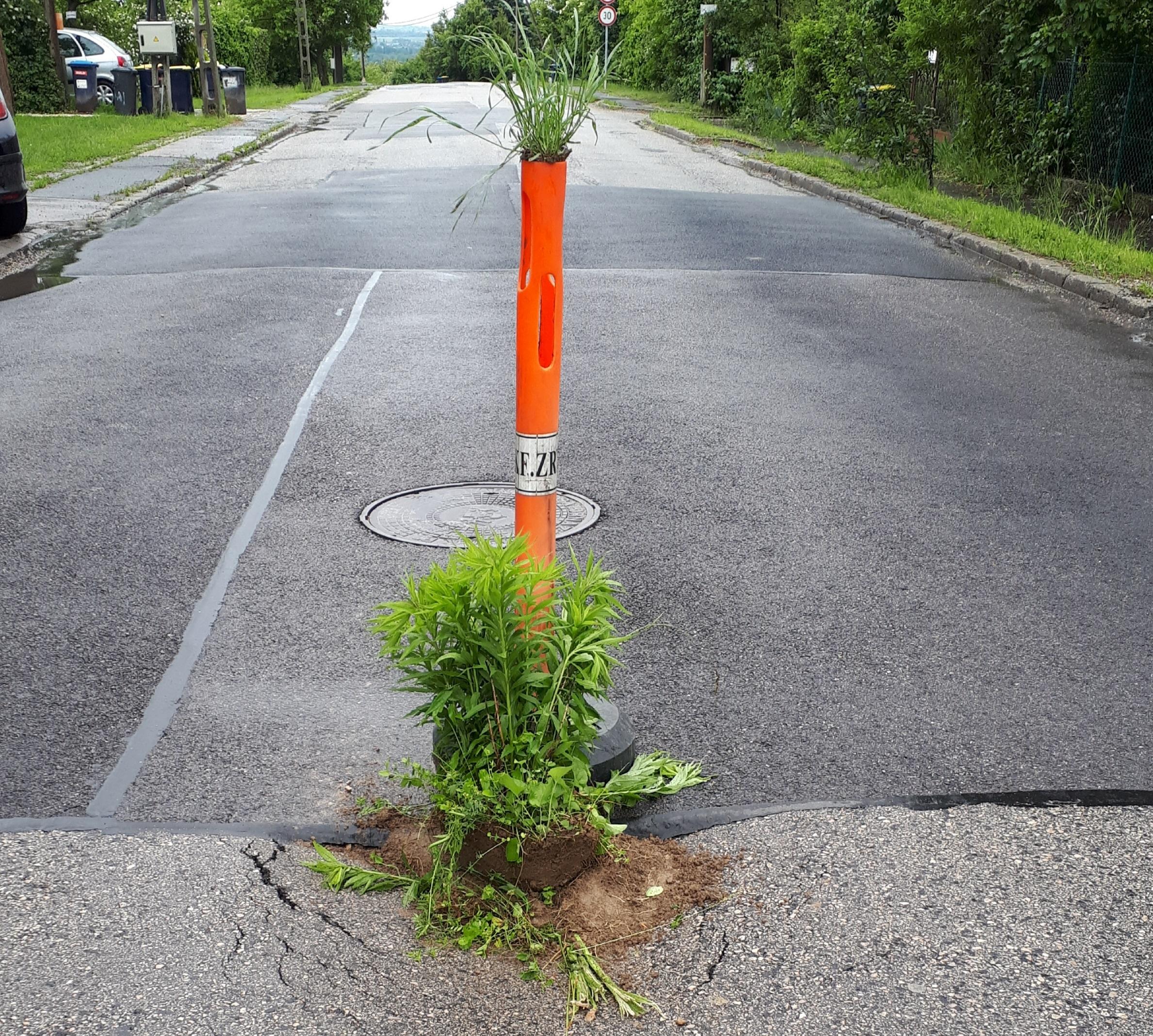 Egy újabb XXII. kerületi kátyú kapott növényeket