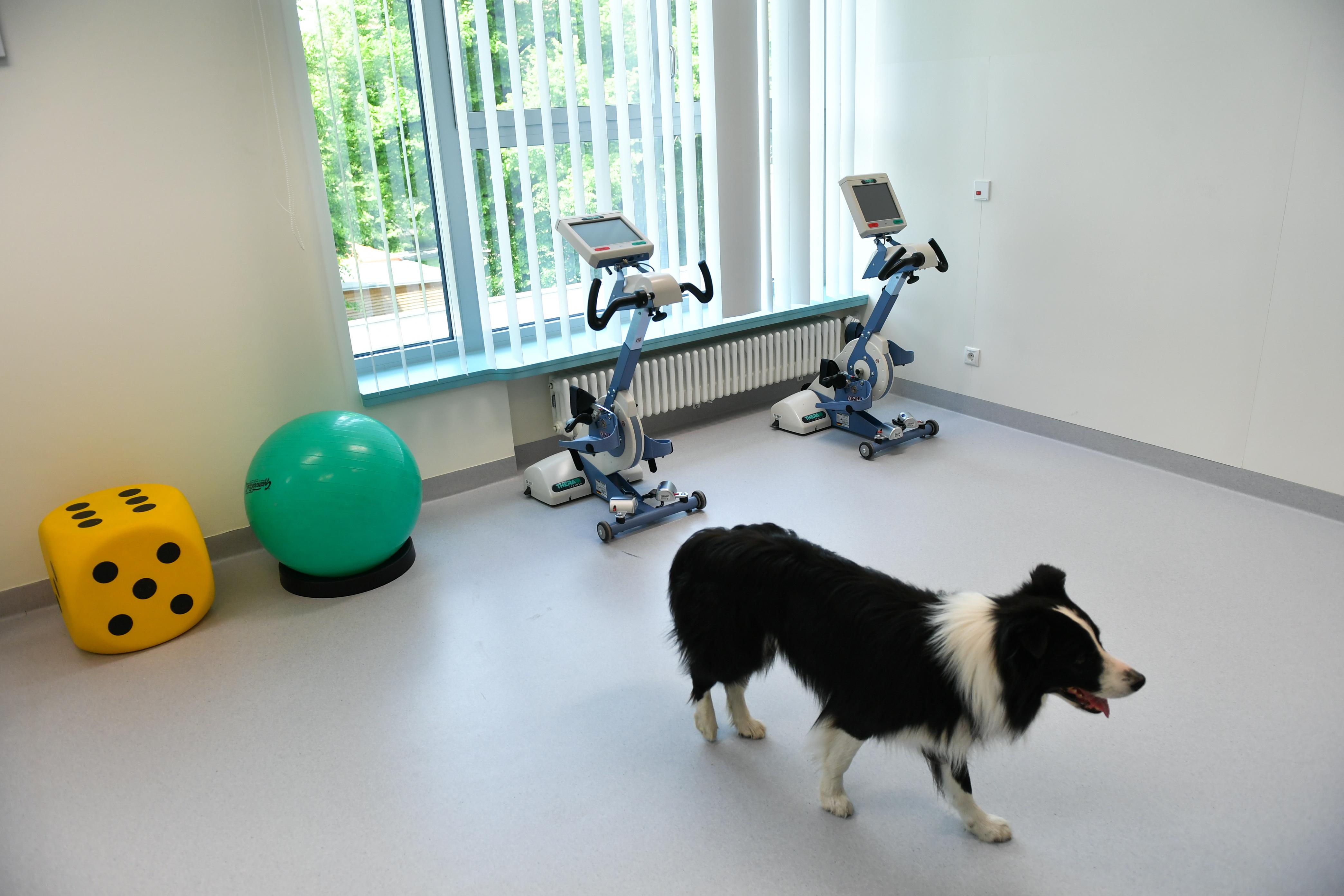 Rendeletet kellene módosítani, hogy a terápiás kutyákat is beengedjék az egészségügyi intézményekbe