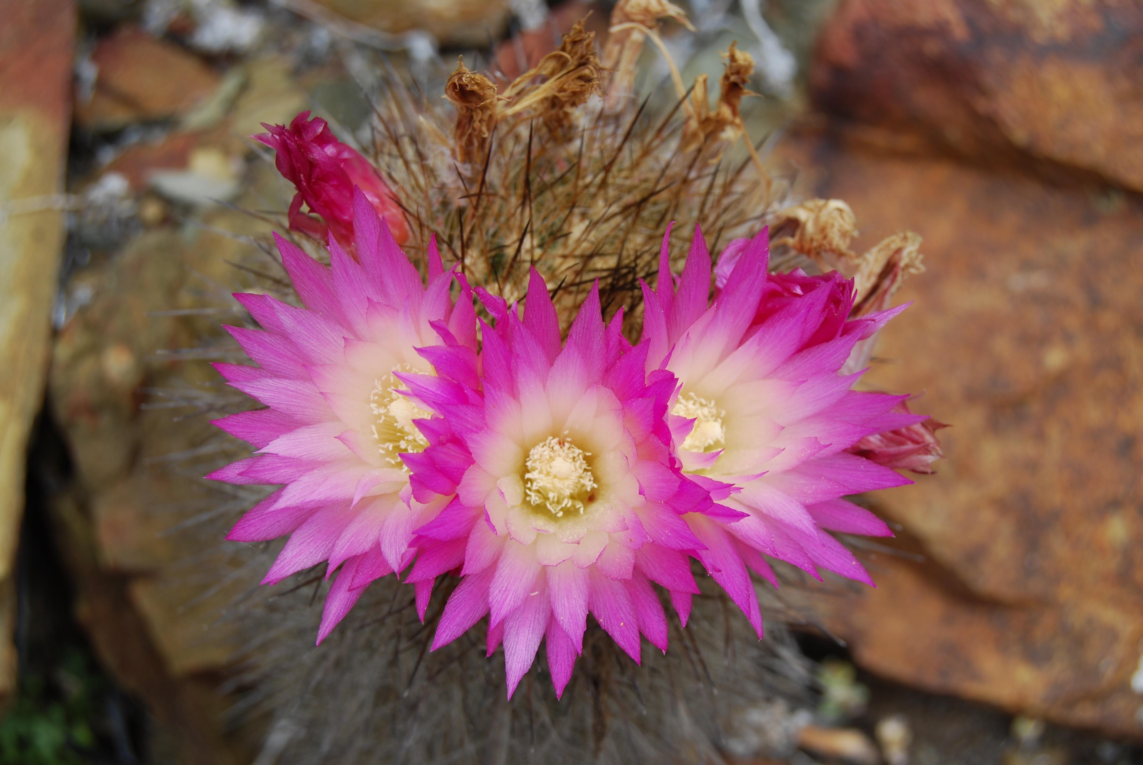 Közel 600 növényfaj halt ki az elmúlt 250 évben