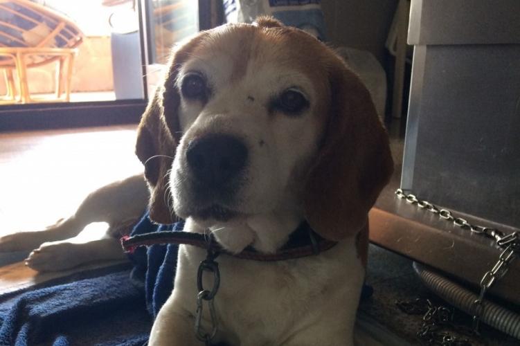 Hörgő, hőgutát kapott kutyát mentettek meg a rendőrök Litéren