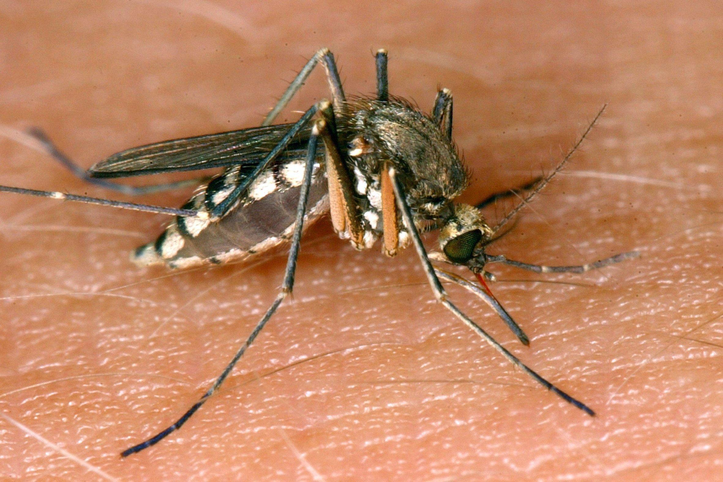 A hőség miatt annyival lustábbak lettek a szúnyogok, hogy le kellett állítani a légi irtást