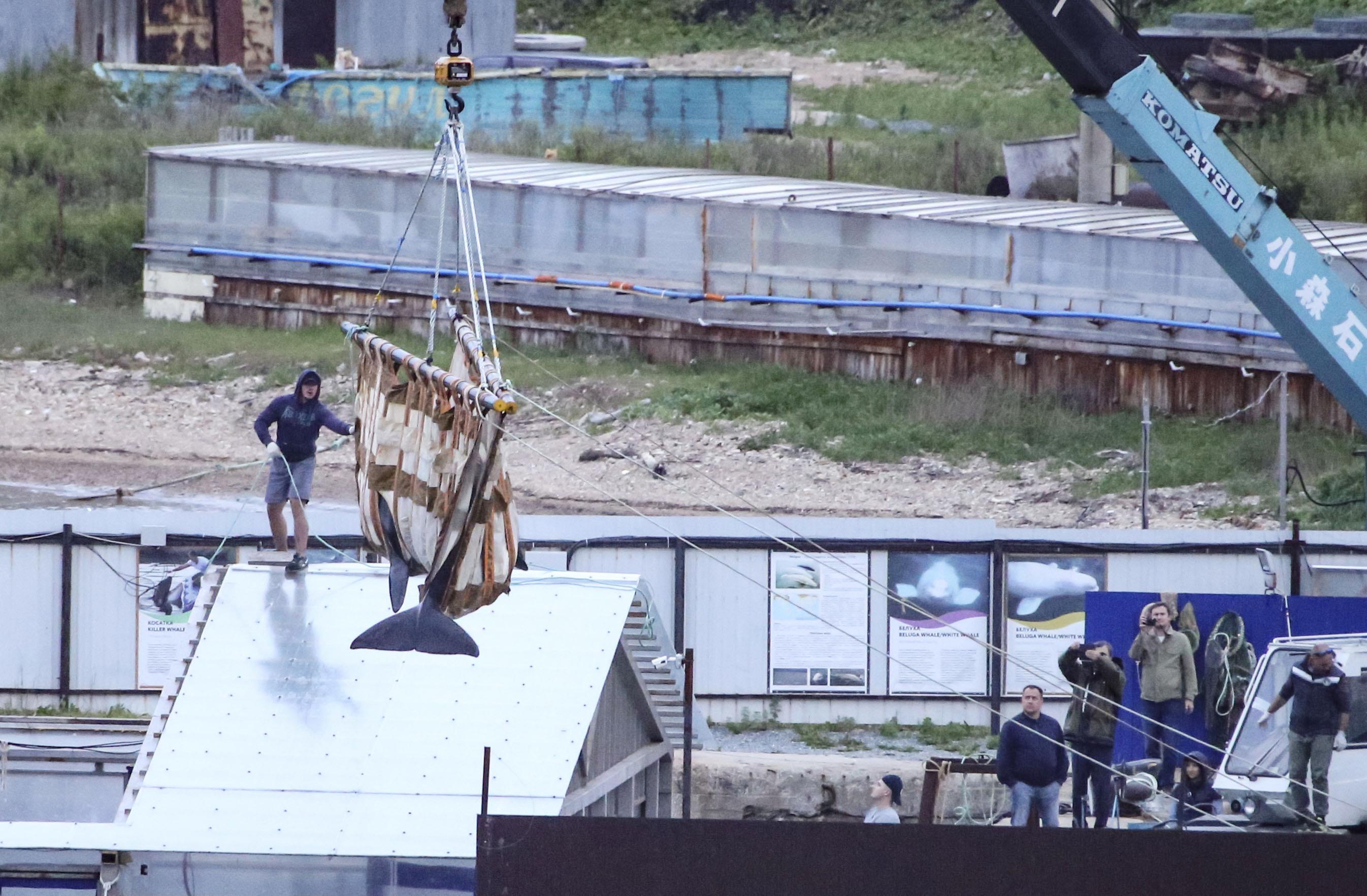 Bezárják az orosz bálnabörtönt, közel 100 cetet engednek szabadon